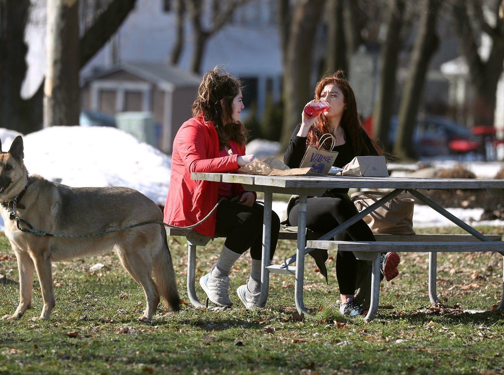 Victoria Cenzi and her dog Ellie join Carly Vittozzi for an outdoor lunch in Cobbs Hill Park Monday. The Rochester had record-setting warmth as temperatures could rise into the low 60's. 