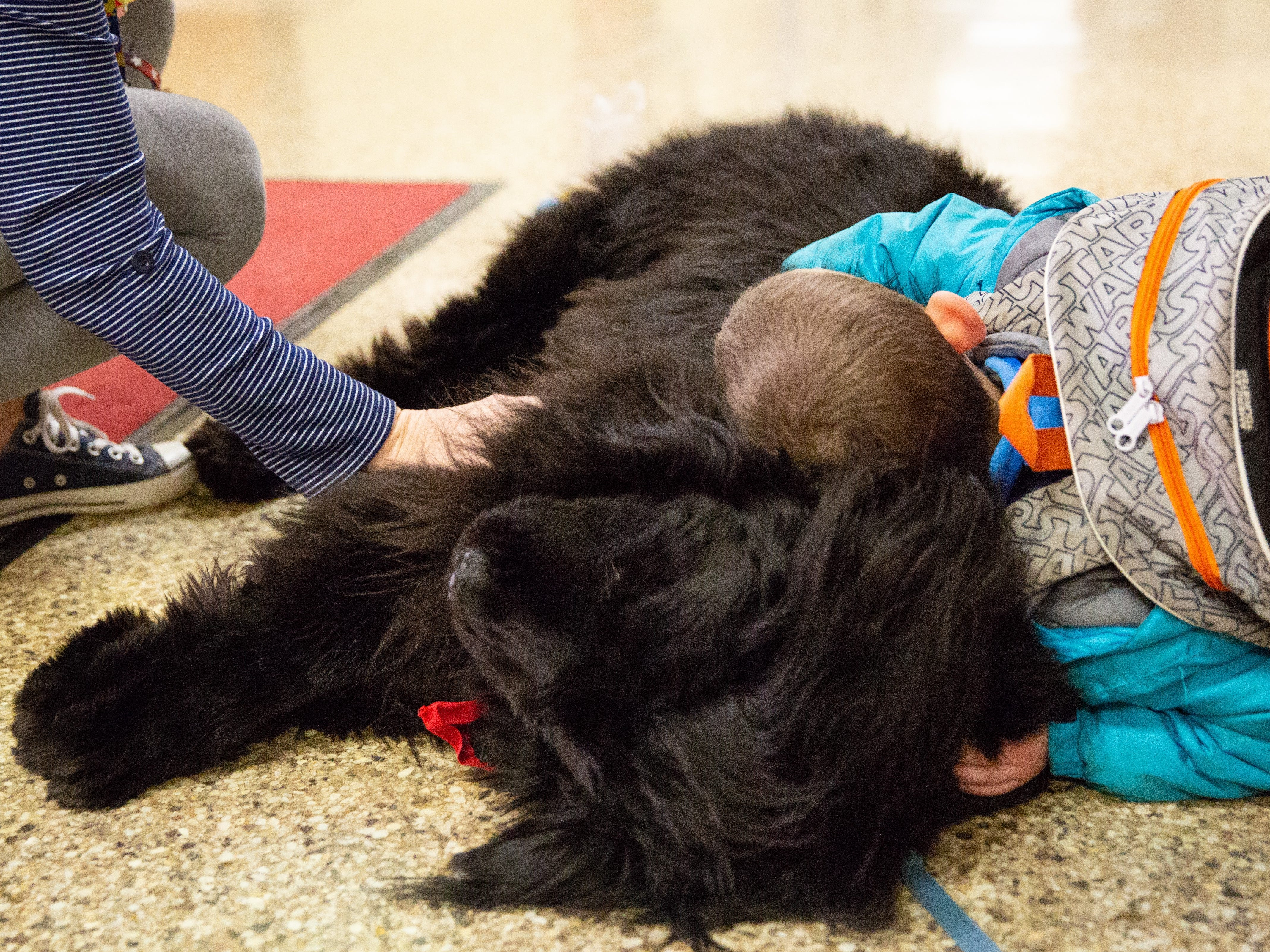 Dominic Mayo, a kindergartner at Neil Armstrong School in Gates, lies on the floor to hug Kelsey, the school's therapy dog, before school starts on the morning of Feb. 4, 2019.