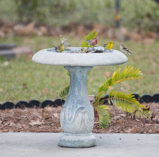 Birds gather at a wildlife friendly home. This year's Apalachee Audubon Wildlife Friendly Yards tour will be Feb.16.