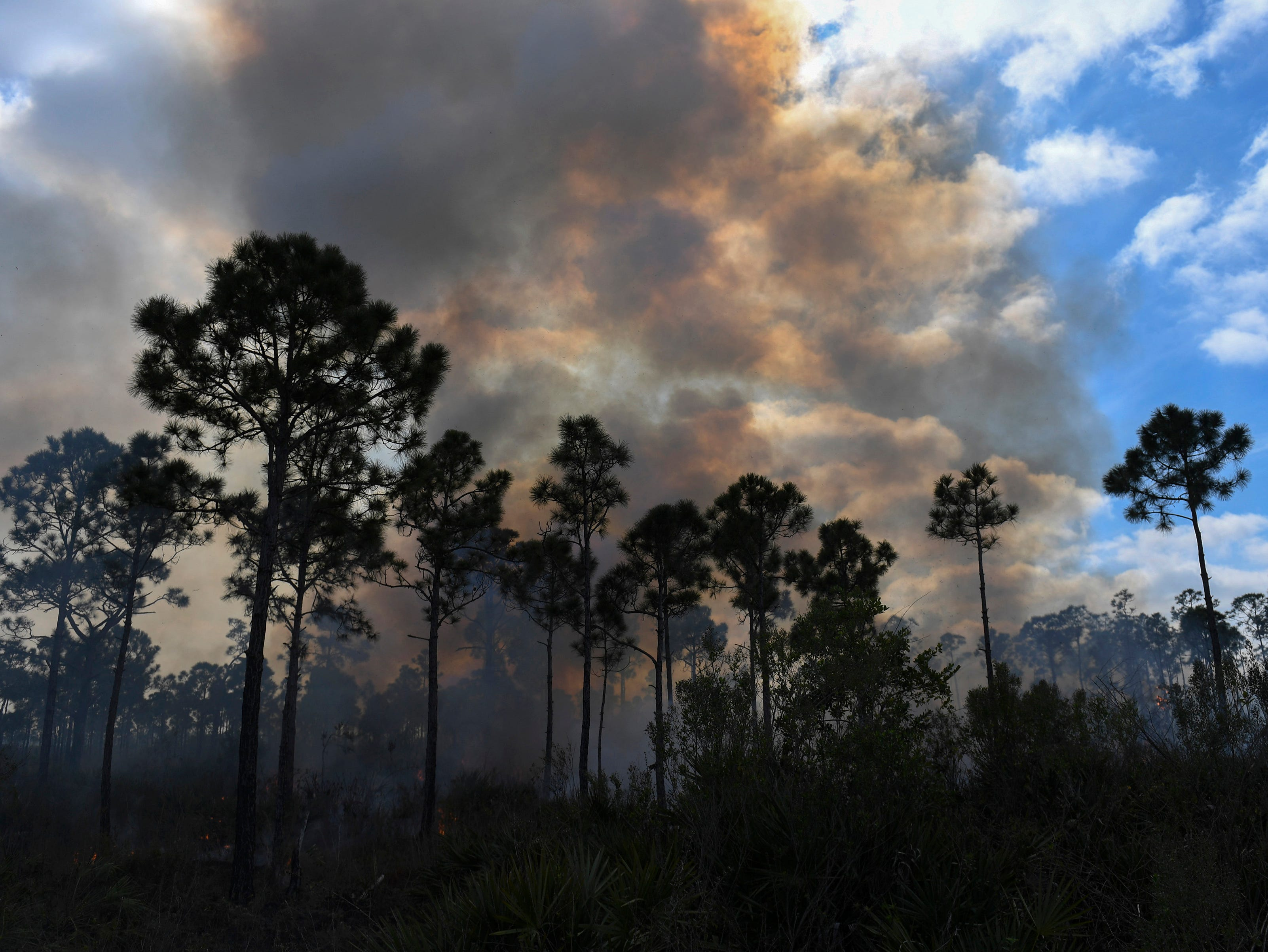 Smoke from a prescribed burn at the Atlantic Ridge Preserve State Park ascends into the sky as approximately 180 acres are burned by the Florida Park Service to prevent the future risk of wildfire near homes on Monday, Feb. 4, 2019, in Hobe Sound.