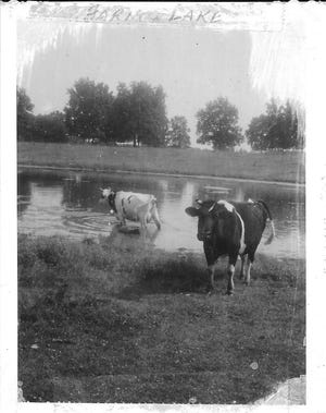 Bob Manzke recalls that even the cows on his family's farm in Illinois enjoyed a dip in Lake Manzke from time to time.