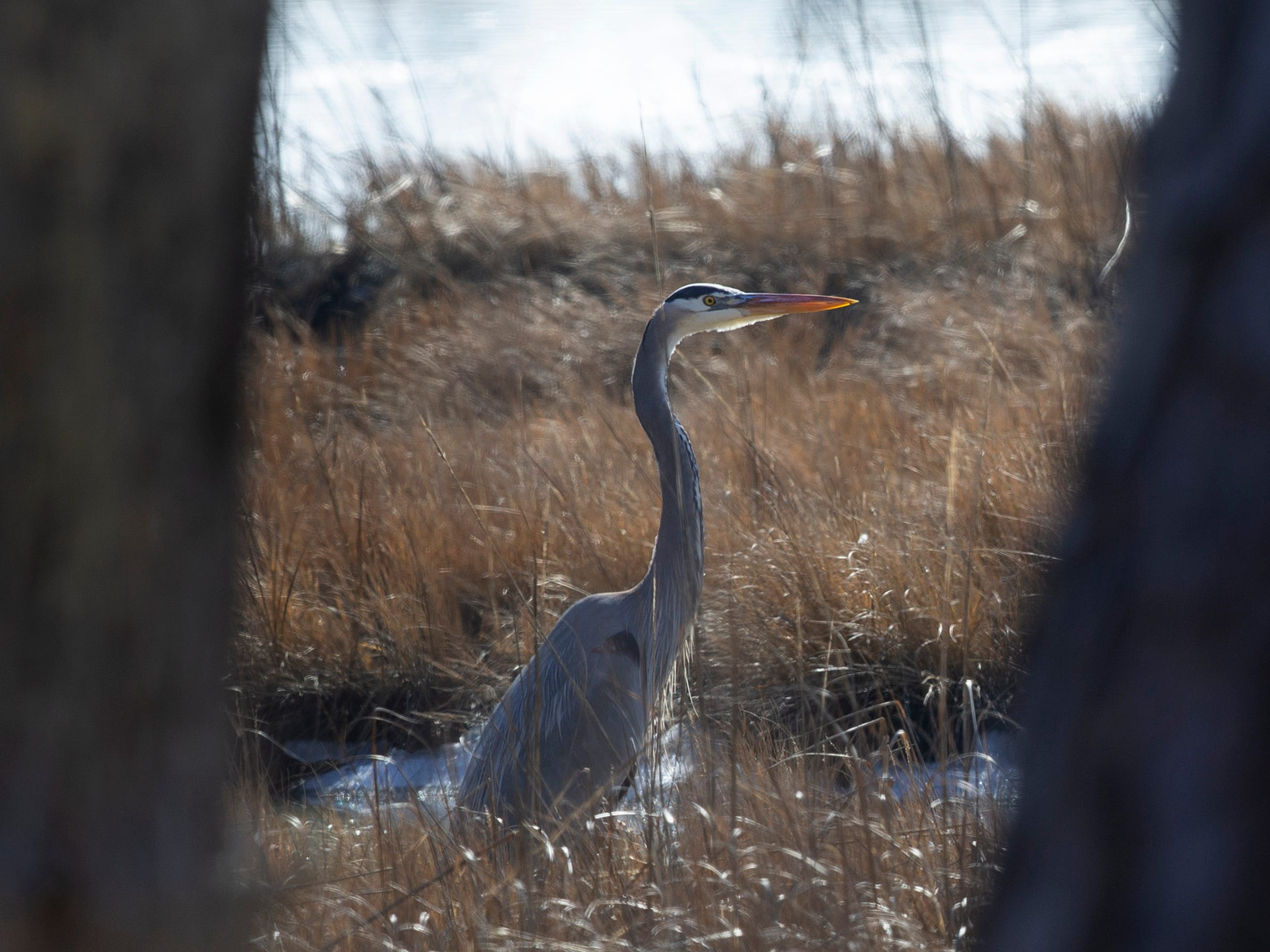 Cattus Island County Park is a 530 acres passive recreation park in Toms River that provides views of the Barnegat Bay and an impressive selection of bird and wildlife.
