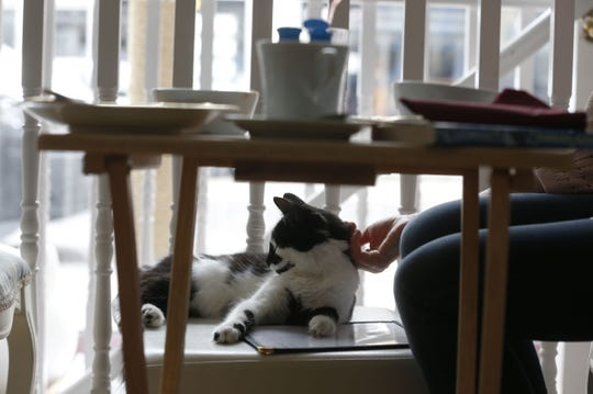 Cat cafes make a great alternative to bars and restaurants for Galentine's Day gatherings.