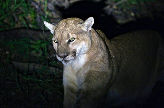 The mountain lion attack took place Monday a 2,711-acre park west of Fort Collins, Colo.