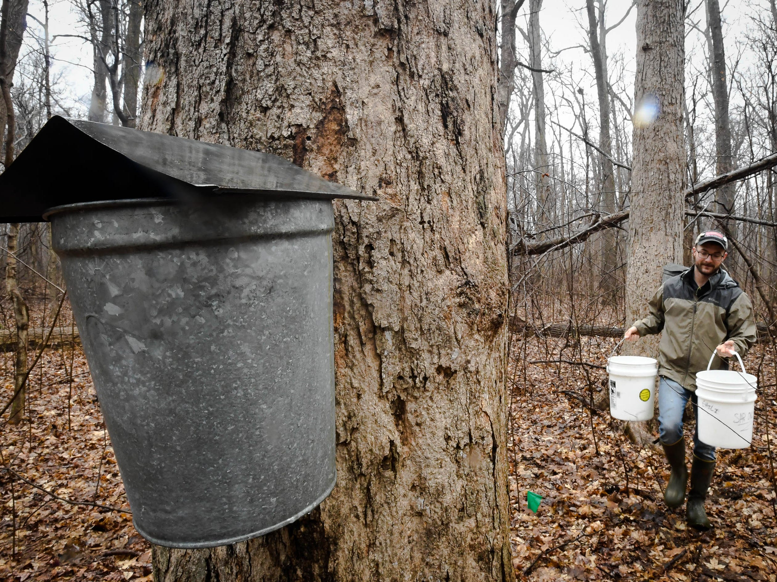 Derek Cox collects sugar maple sap from the trees at the Wesselman Woods Nature Preserve Tuesday, cooking down sap from the preserve's sugar maple trees February 5, 2019.  The sap is boiled down to make syrup for the park's Annual Sugarbush Festival. In its 40th year, held March 2nd and 3rd from 7 a.m. to 1 p.m., the festival features a hardy all you can eat pancake breakfast and guided tours in the park to see how the sap is collected and cooked down.