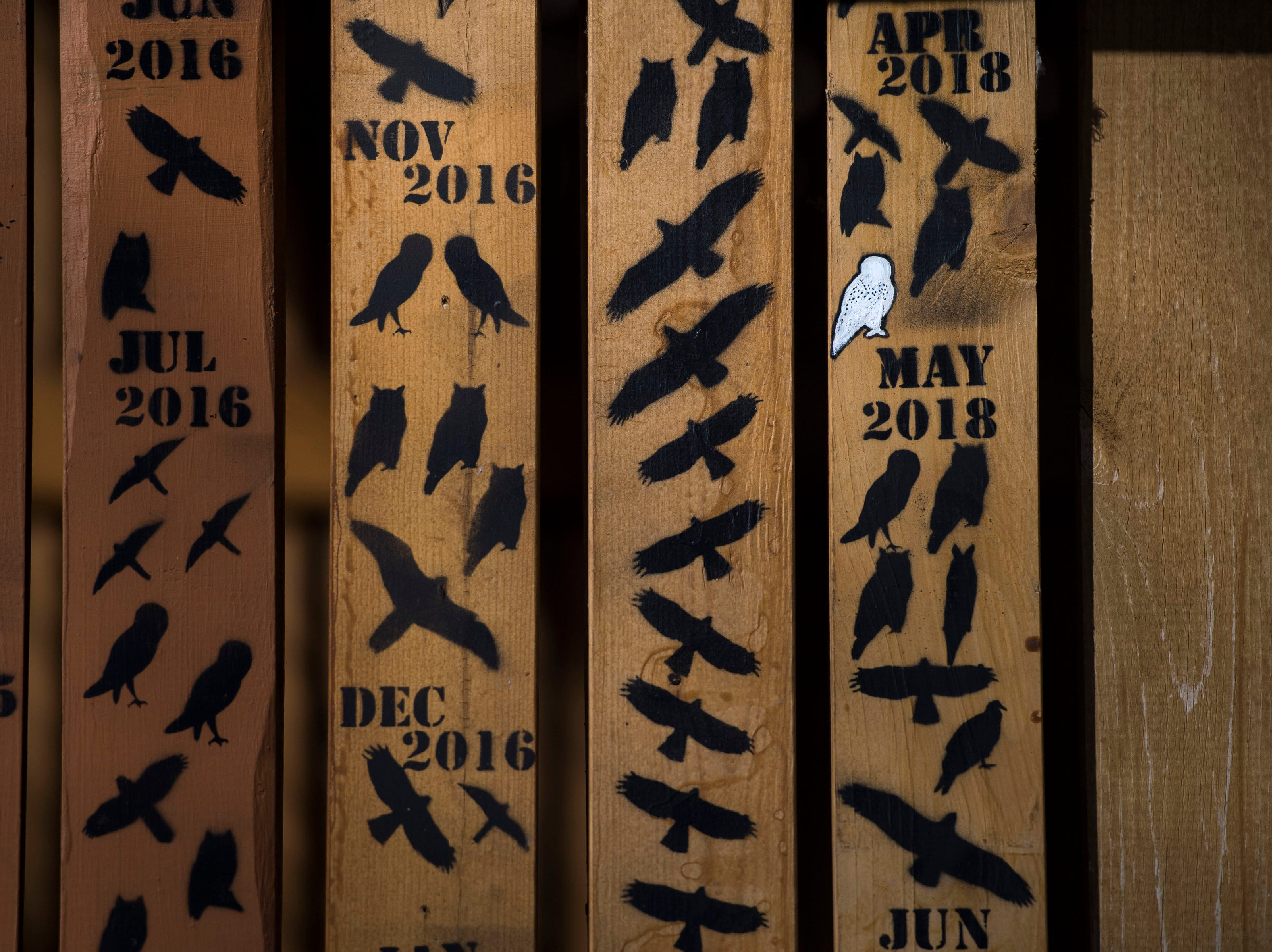 Silhouettes of all the raptors released back into the wild are painted onto the walls of a building used to house raptors being rehabilitated on Friday, Feb. 1, 2019, at the Rocky Mountain Raptor Program in Fort Collins, Colo.
