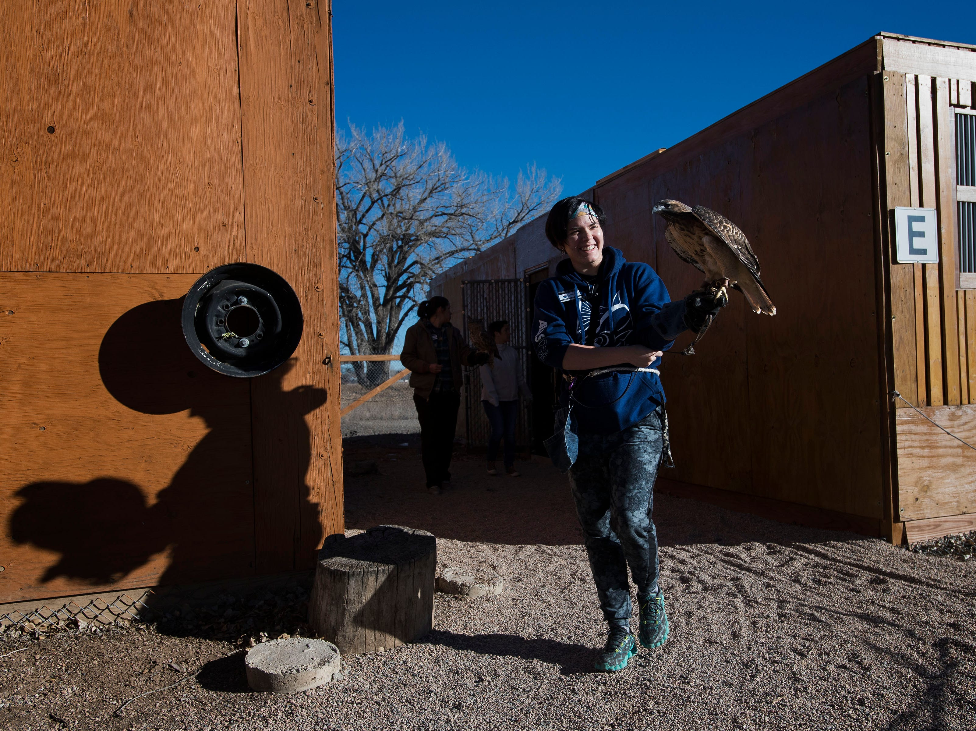 Handler Dominique Thigpen carries an educational red-tailed hawk out from its cage to be fed and on Friday, Feb. 1, 2019, at the Rocky Mountain Raptor Program in Fort Collins, Colo.