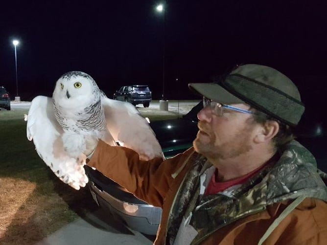 Frank Ujazdowski, Project SOAR cofounder and volunteer falconer from the Fox Cities, handles one of the snowy owls he safely captured from Green Bay Austin Straubel International Airport.