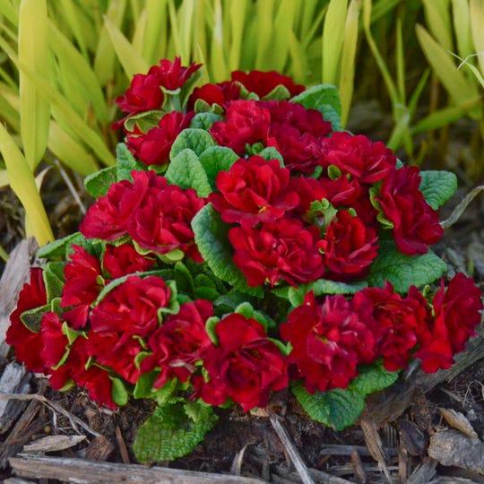 The Hoosier Gardener These Plants Symbolize Spirit Of