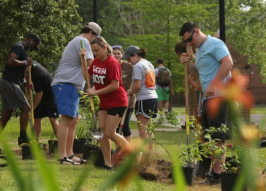 Student volunteers plant buttonbush shrubs, pickerelweed and rose mallows for a bioswale on the University of Louisiana at Lafayette campus.