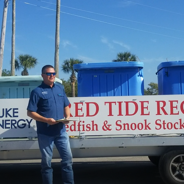 More than 16,000 fish released in Gulf to ease effects of red tide