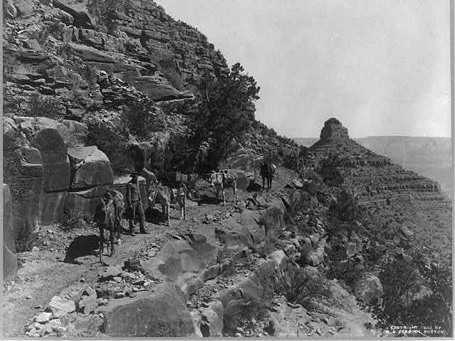 Mule trains were a common sight long before the Grand Canyon became a national park. This image is from 1902.