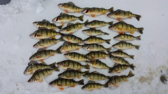 Starting April 1, Michigan anglers will only be able to take 25 yellow perch per day.