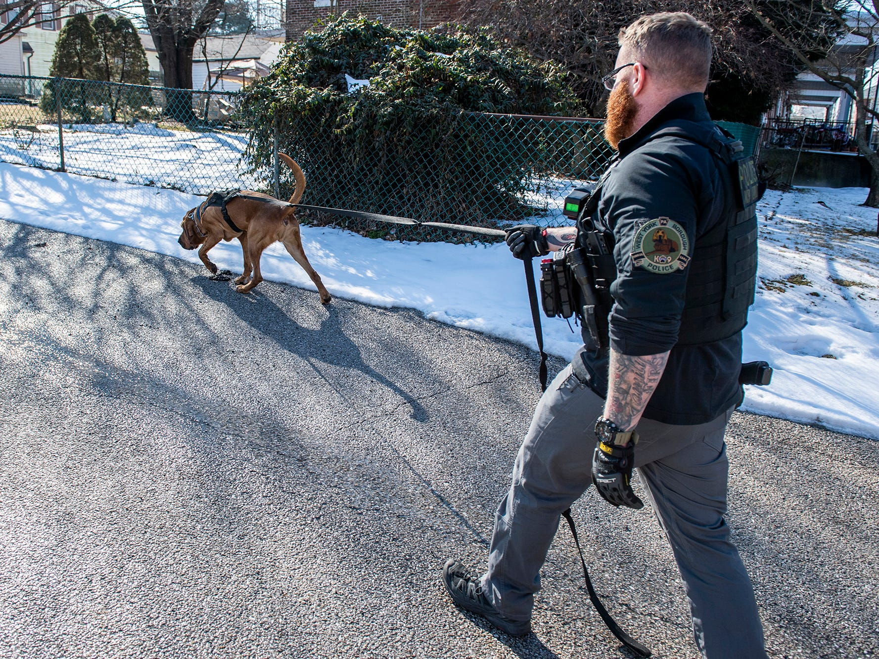 Detective Prince leads Cpl. Scott Musselman on a trail during a demonstration in front of West York Borough Police Department's station, Monday, Feb. 4, 2019. West York Borough's Detective Prince - who just turned 2-years old - has helped county law enforcement in 30 cases over the past year.