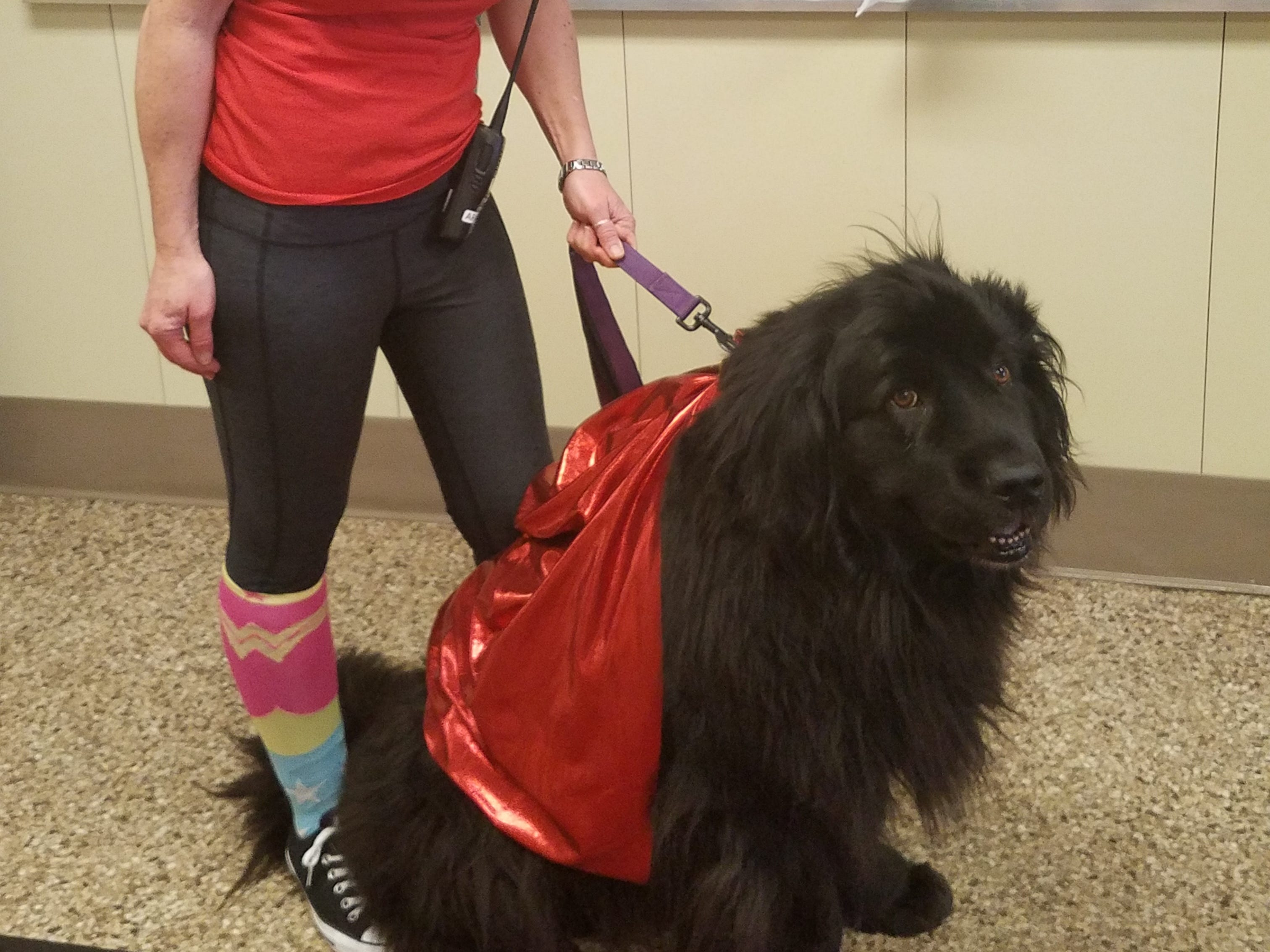 Chris Magee, school social worker at Neil Armstrong School in Gates, dressed up as a superhero with her dog, Kelsey, who is a certified therapy dog at the Gates-Chili primary school.