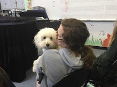 Charlie, one of three certified therapy dogs owned by Jill Davis, a vocal music teacher at Palmyra-Macedon High School, snuggles with a student at school.
