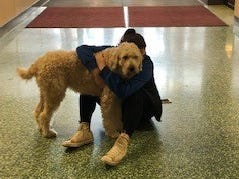 Katie, one of three certified therapy dogs owned by Jill Davis, a vocal music teacher at Palmyra-Macedon High School, comforts a student at school.