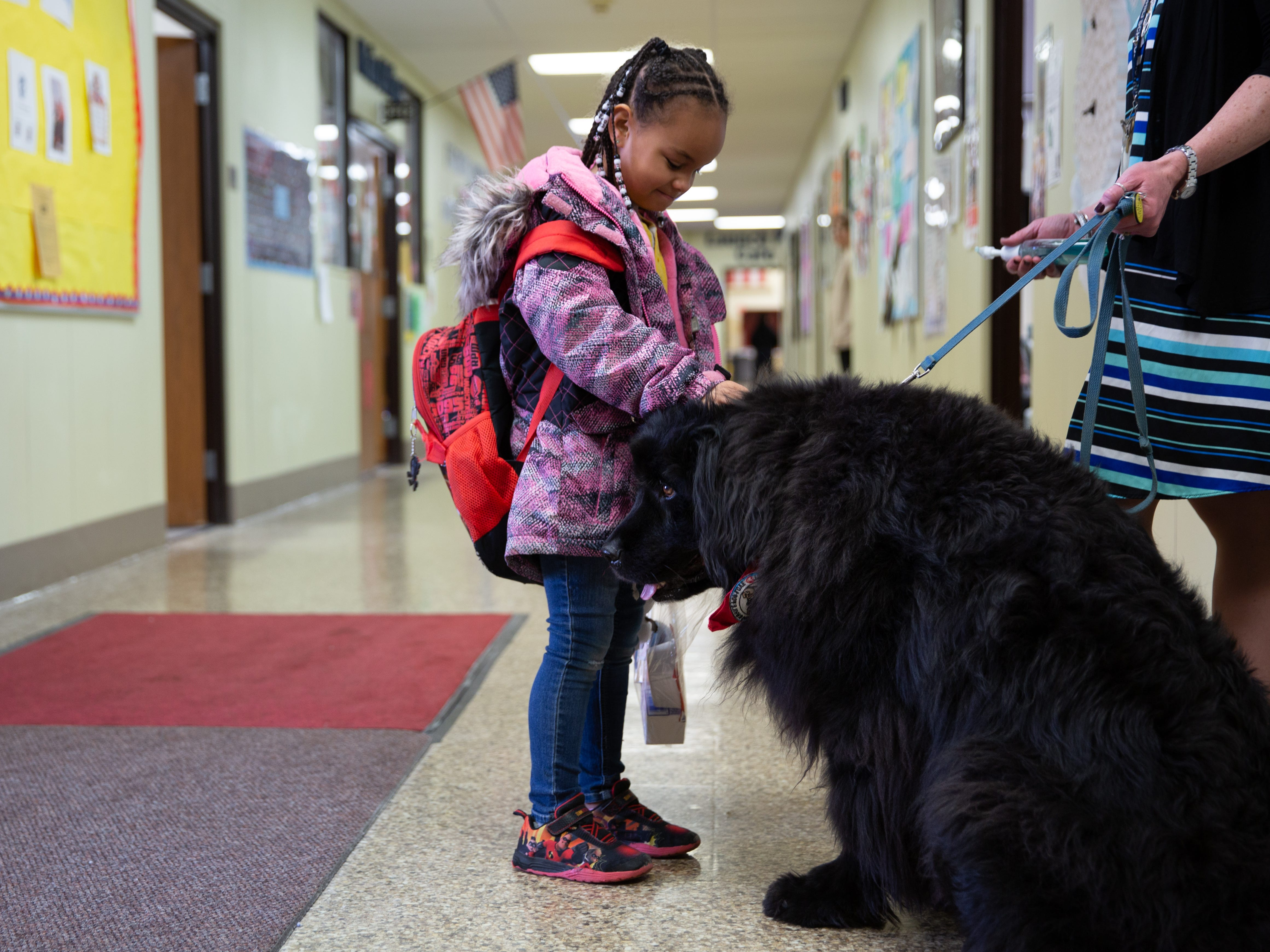 Sophia Cruz, a first-grader at Neil Armstrong School in Gates, greets Kelsey on her way into school on Monday, Feb. 4, 2019. Kelsey, a Newfoundland, serves as the school's certified therapy dog and works with school social worker Chris Magee.