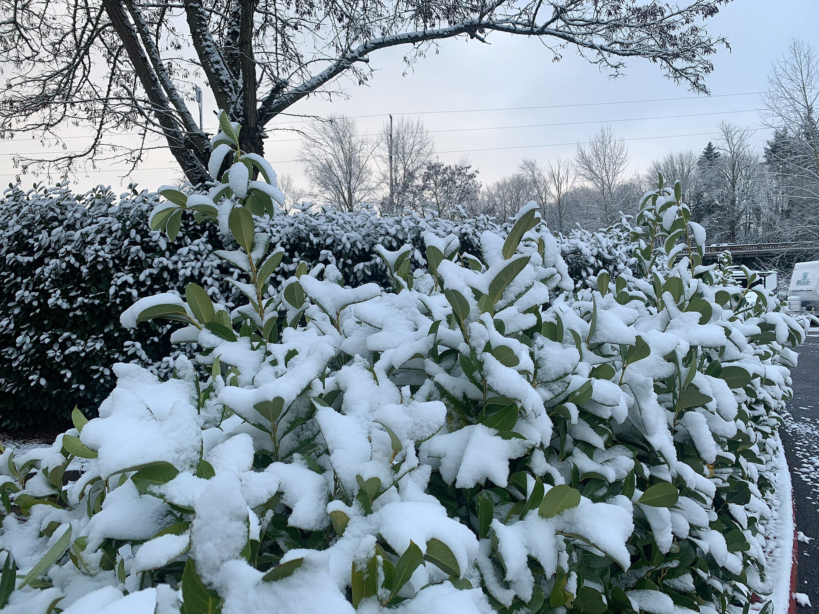 Snow covers much of the mid-Willamette valley Tuesday morning. Snow covered cars, trees and yard ornaments greeted residents of Canby, Oregon Tuesday February 5, 2019.