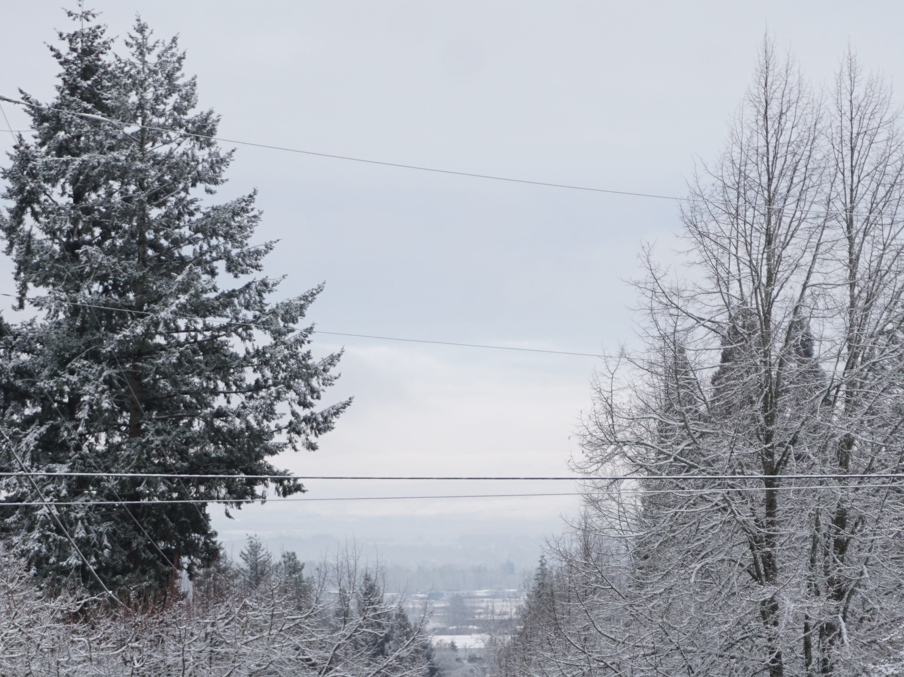 Snow dazzles the trees along Vista Avenue SE on Tuesday, Feb. 5, 2019 in Salem.