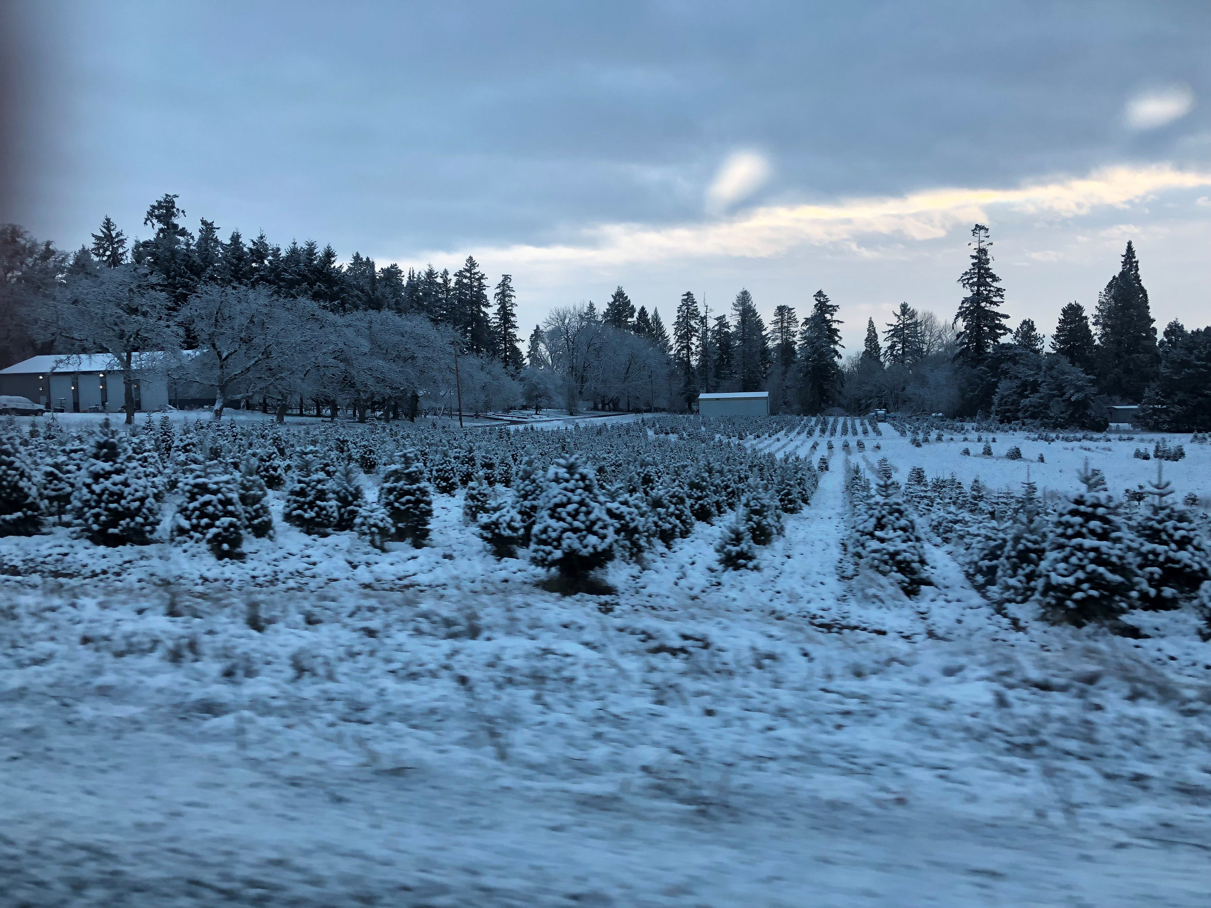 Snow covers fields in Polk County early Tuesday, February 5, 2019.