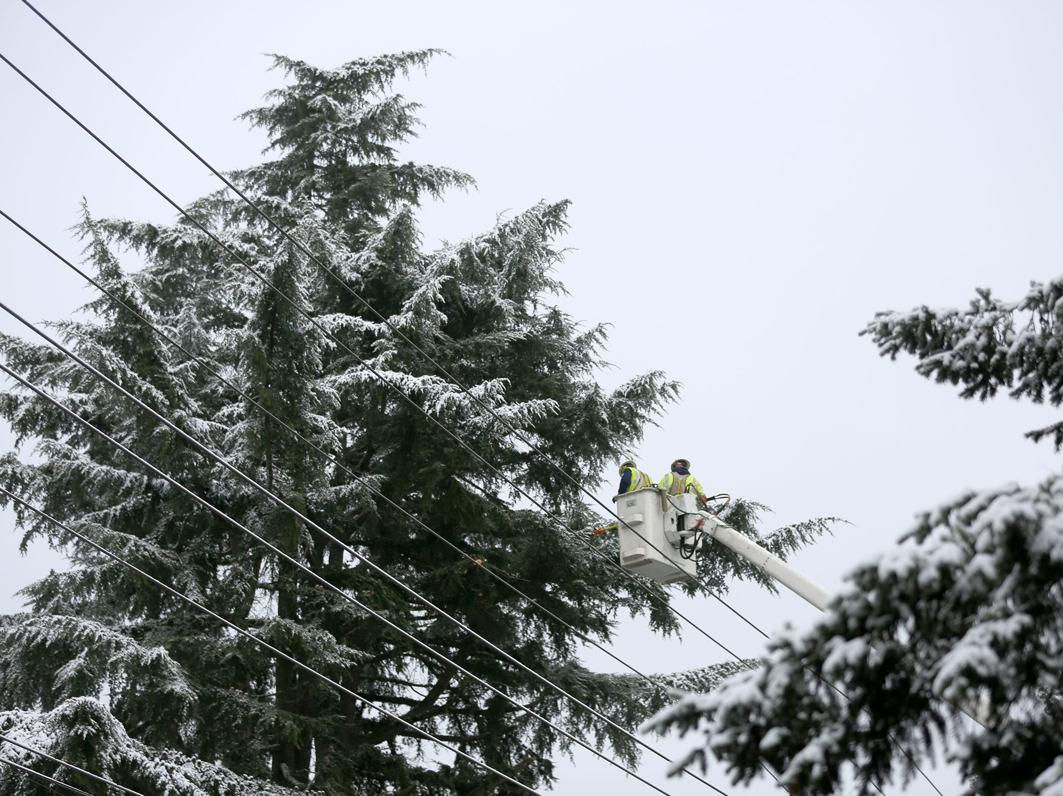 City workers trim tree branches growing close to electric wires in the snow on Tuesday, Feb. 5, 2019.