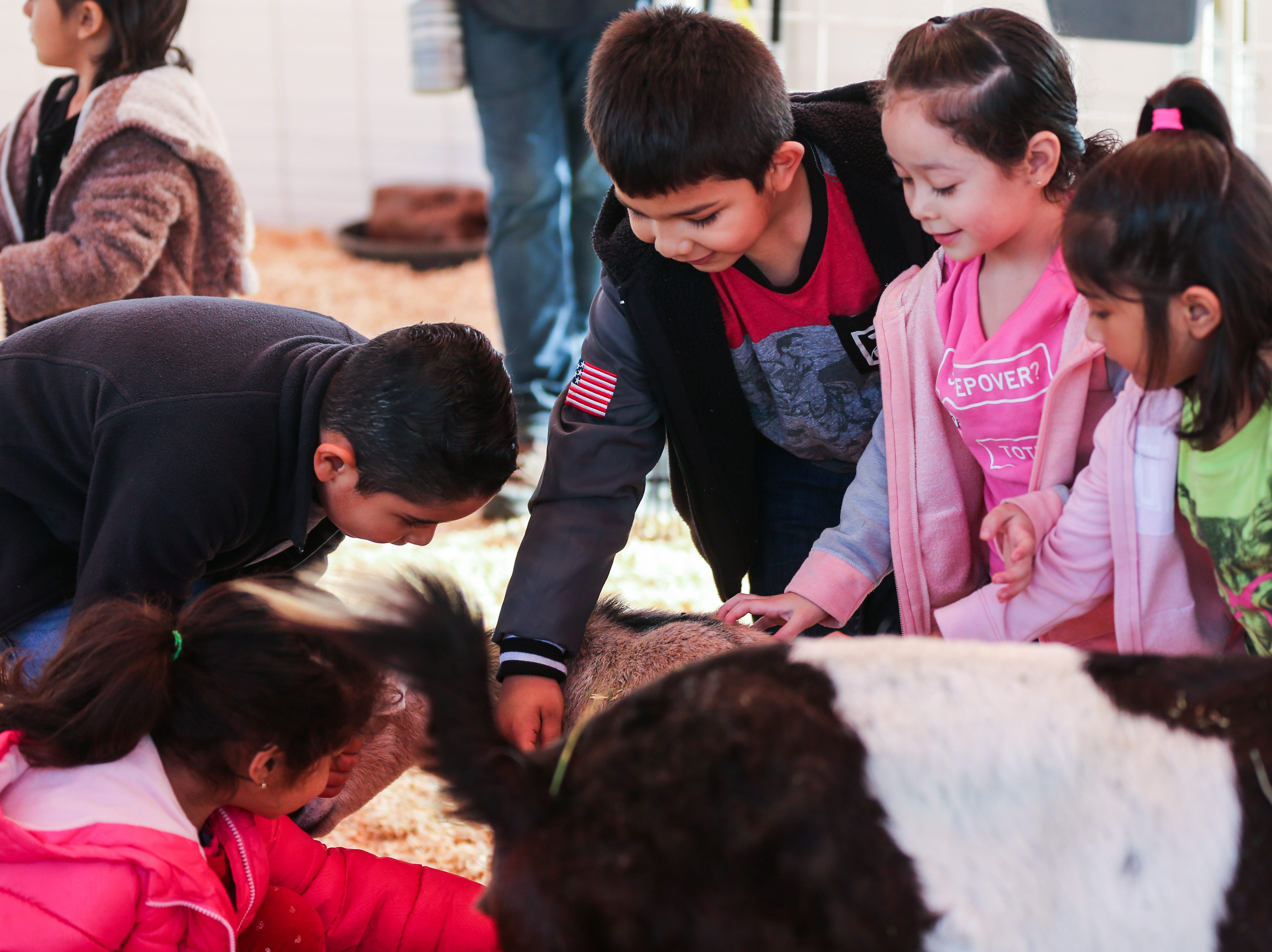 Kindergarteners from Miles pet animals during a field trip to the San Angelo Stock Show & Rodeo Tuesday, Feb. 5, 2019, at the San Angelo Fairgrounds.