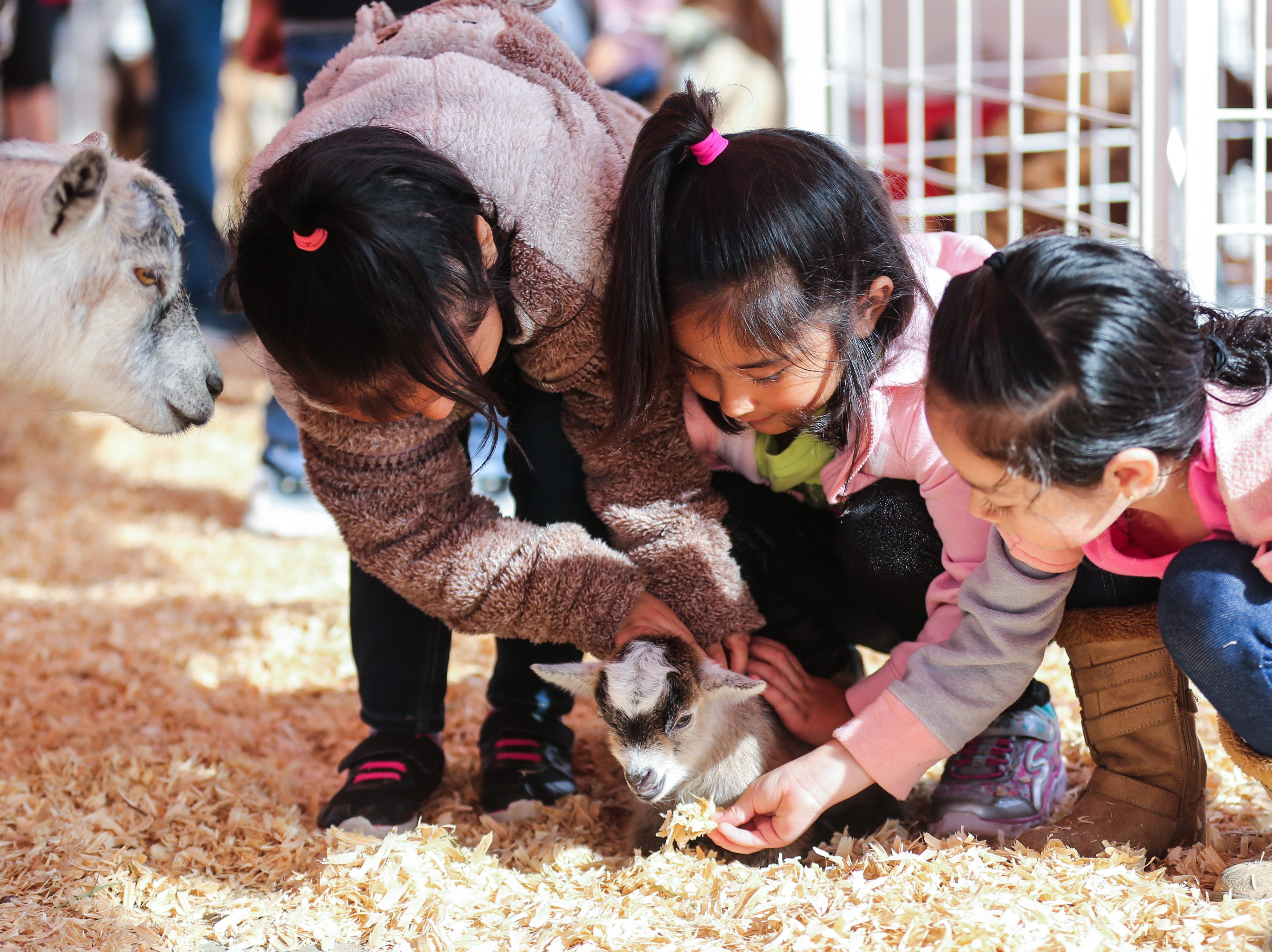 From left, Miles kindergarteners Abril Martinez, Samantha Olade and Jocelyn Sanchez pet a 5-day old goat during a field trip to the San Angelo Stock Show & Rodeo Tuesday, Feb. 5, 2019, at the San Angelo Fairgrounds.