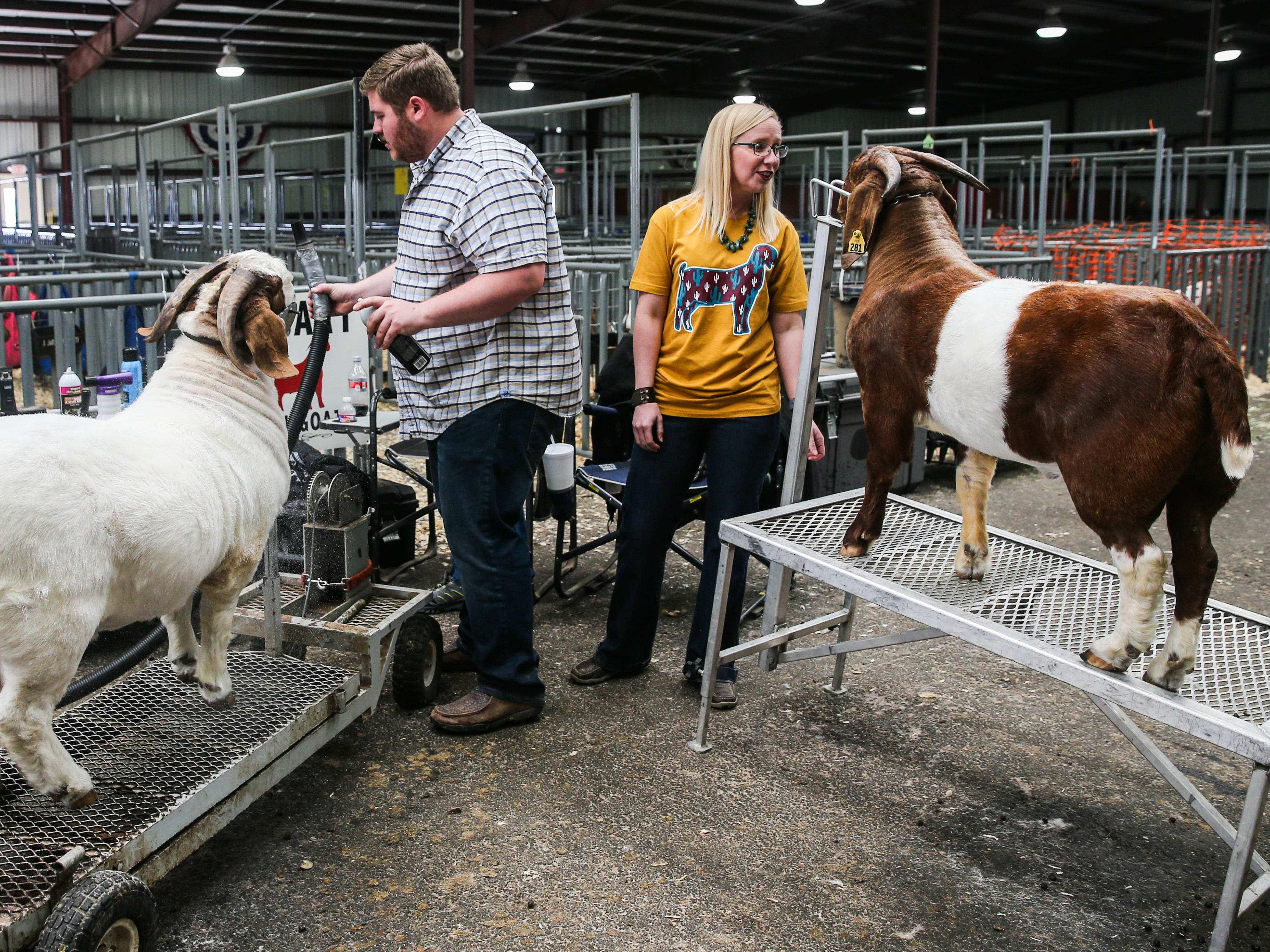 Participants groom boer goat before the open show during San Angelo Stock Show & Rodeo Tuesday, Feb. 5, 2019, at the at the First Financial Pavilion.