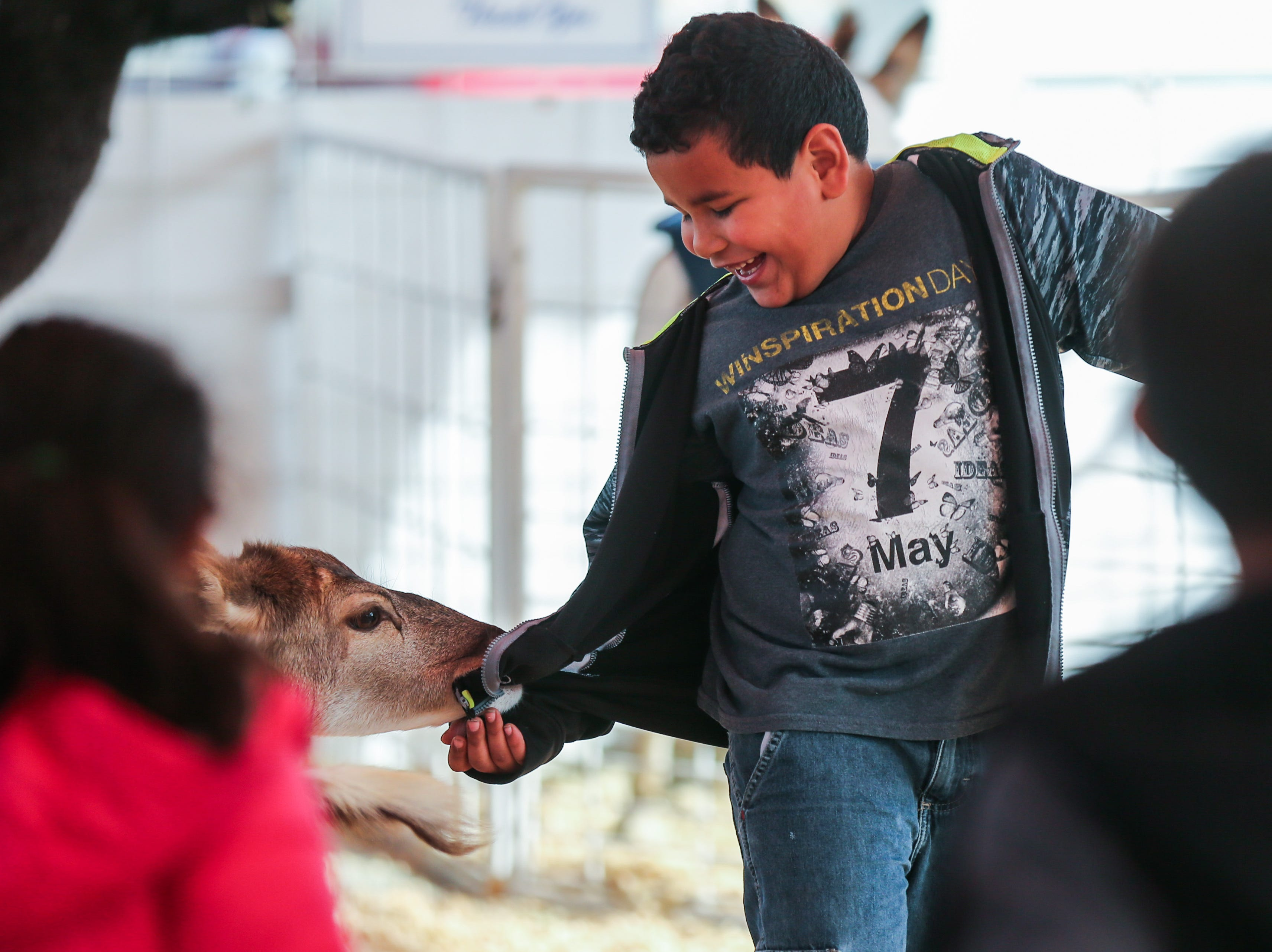 Brandon Montoya, 5, laughs as a deer nibbles on the back of his shirt during a field trip to the San Angelo Stock Show & Rodeo Tuesday, Feb. 5, 2019, at the San Angelo Fairgrounds.