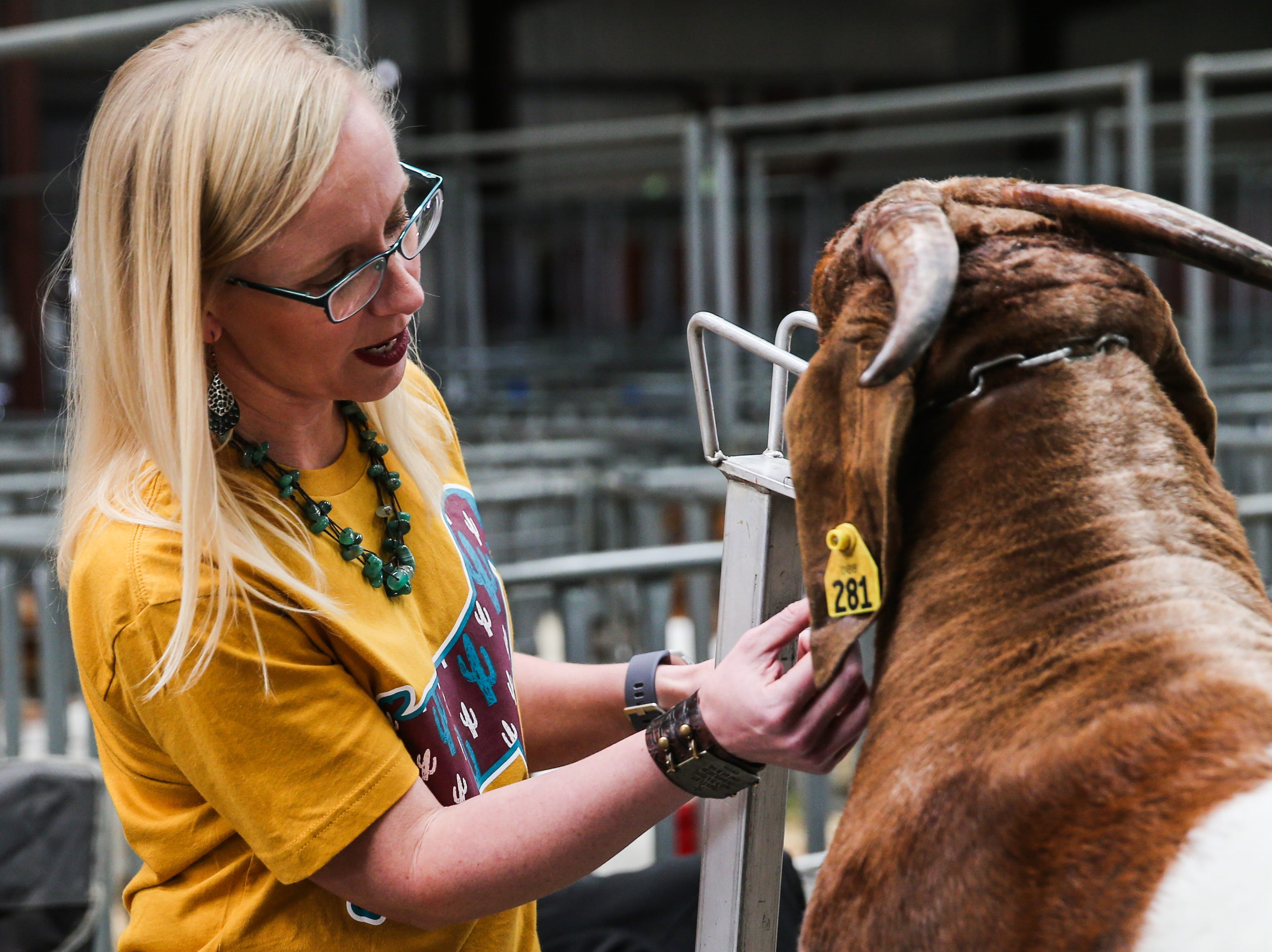 Becky Kidd from Sweetwater grooms a boer goat before the open show during San Angelo Stock Show & Rodeo Tuesday, Feb. 5, 2019, at the at the First Financial Pavilion.
