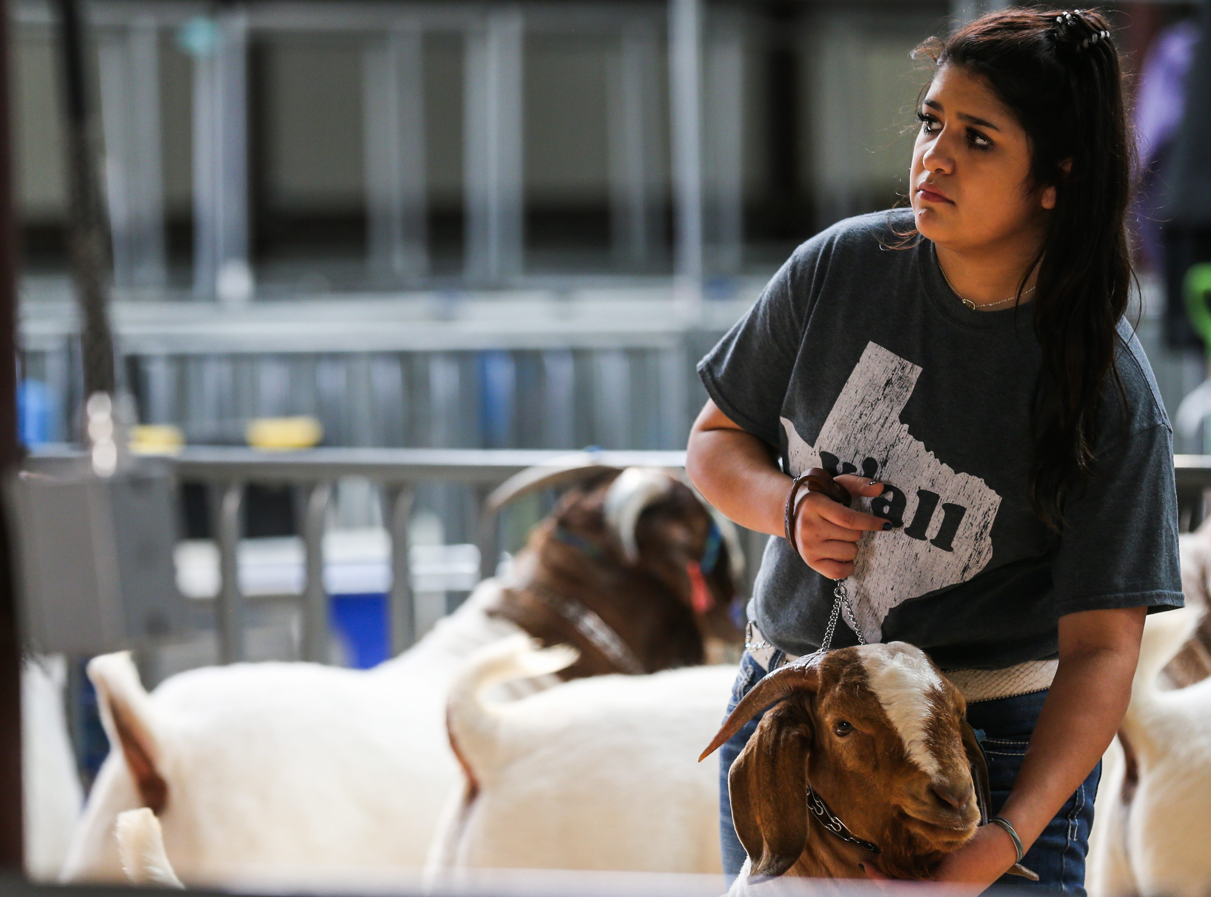 Khira Santiago from San Angelo gets ready to enter the arena for judging during the open boer goat show during San Angelo Stock Show & Rodeo Tuesday, Feb. 5, 2019, at the at the First Financial Pavilion.