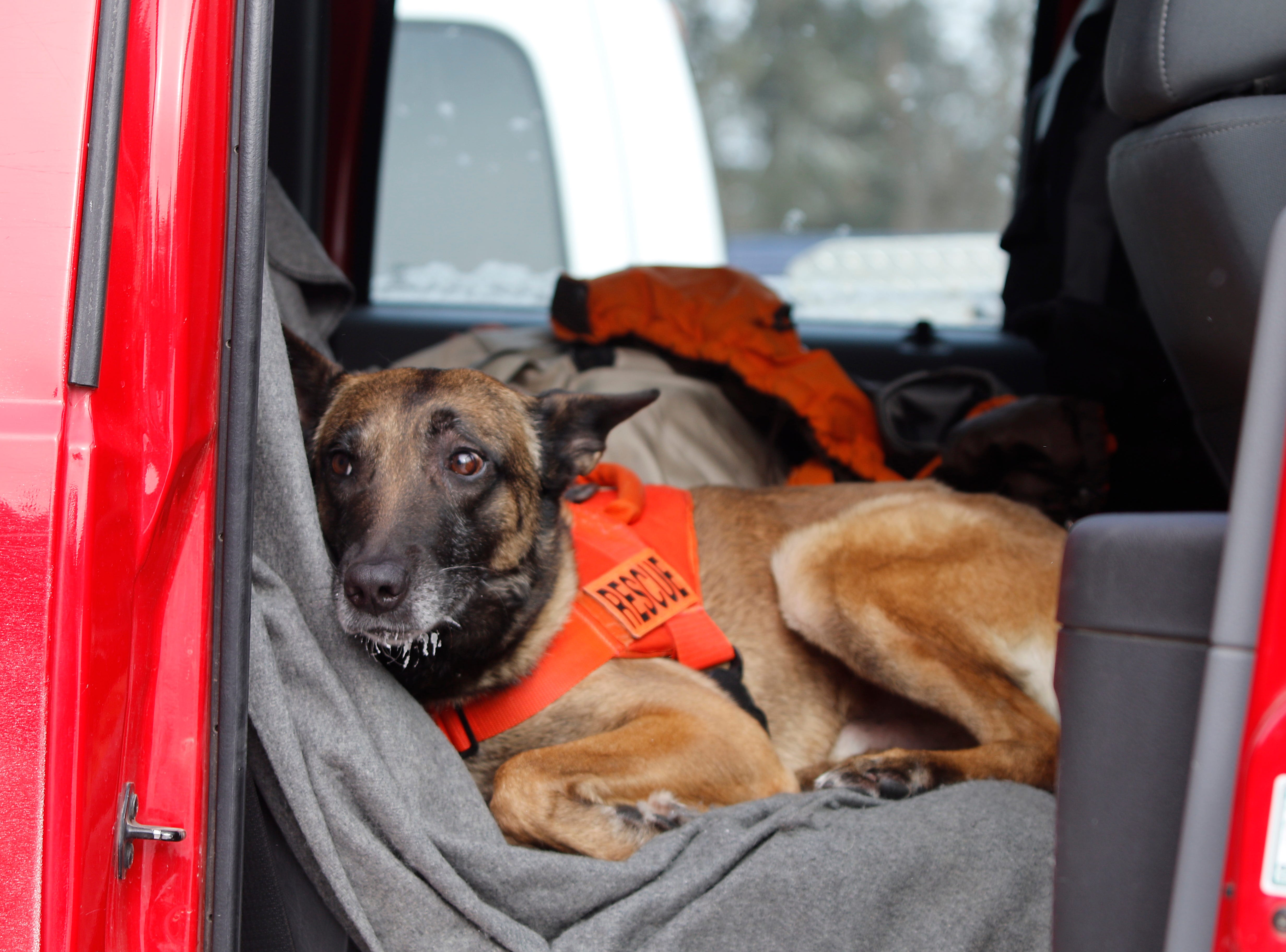 Cisco, a search-and-rescue dog with the Rapid City Fire Department, takes a break during the search efforts for a missing 9-year-old girl in freezing weather near Rockerville, S.D., Monday, Feb. 4, 2019. Authorities say that Serenity Dennard ran away from staff at a residential youth home.