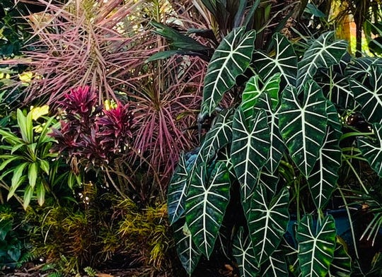 Lovely landscape designs to be seen on the Garden Club of Stuart's March 23-24 tour.