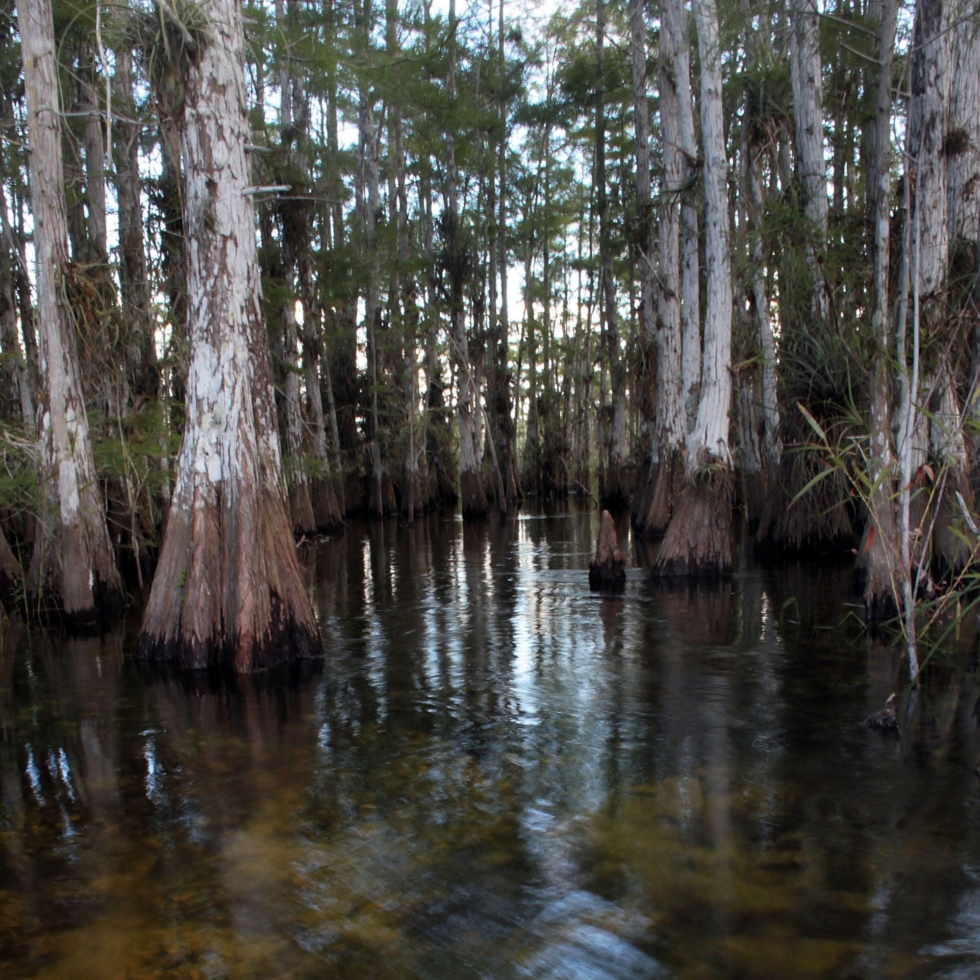 Appeals court clears way for landowner to drill exploratory oil well in Everglades