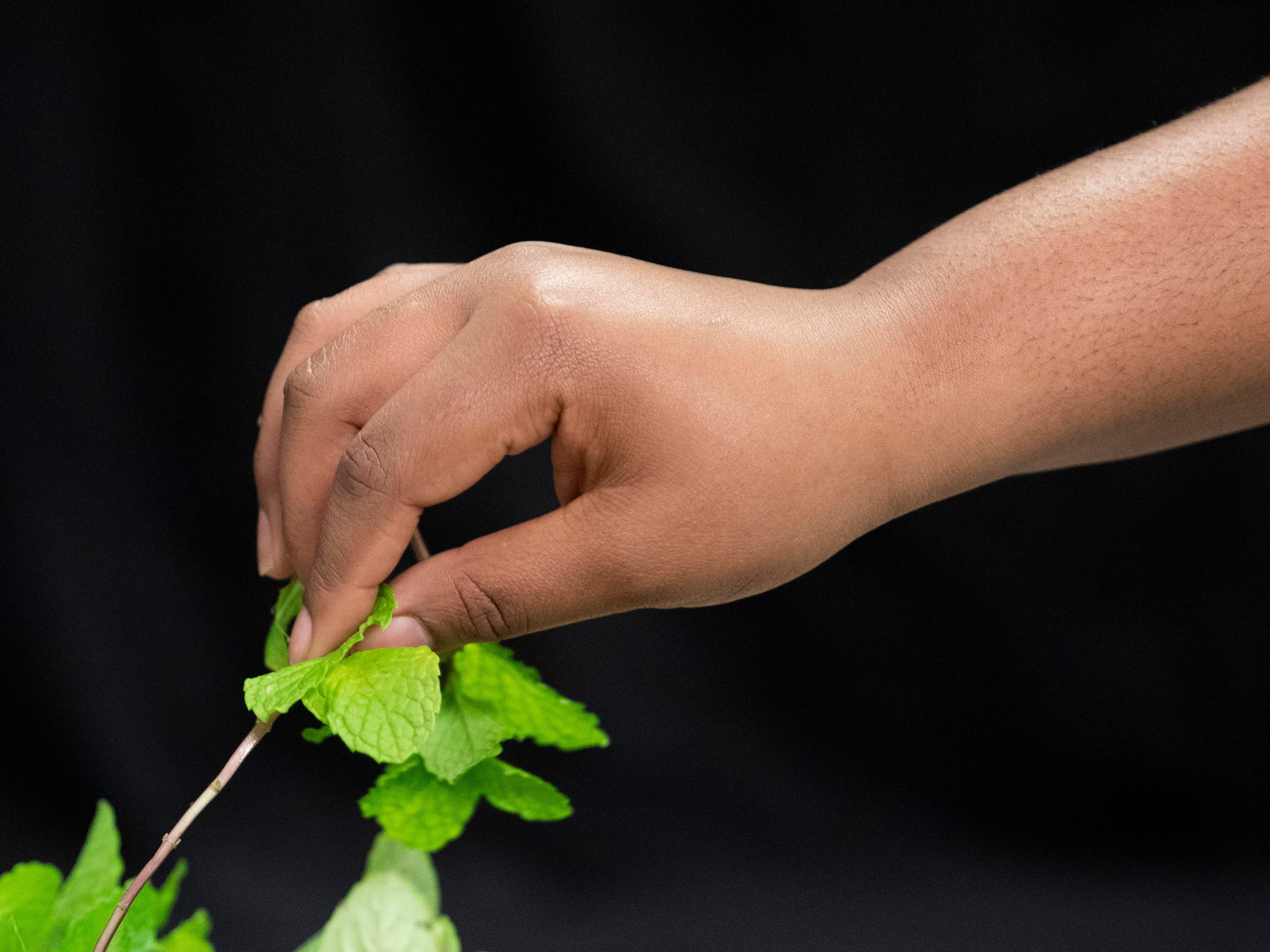 Charisma Daniels, 14, of Stuart picks mint to add flavor to her sparkling water during a free, hands-on cooking class on Monday, Feb. 4, 2019, at the 10th Street Community Center in Stuart. Daniels learned how to rub the leaves to release the oils and scent of the plant.