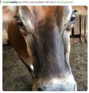 """Gotta love the close up of the cow asking Mint Mobile """"what is your problem with dairy?'"""