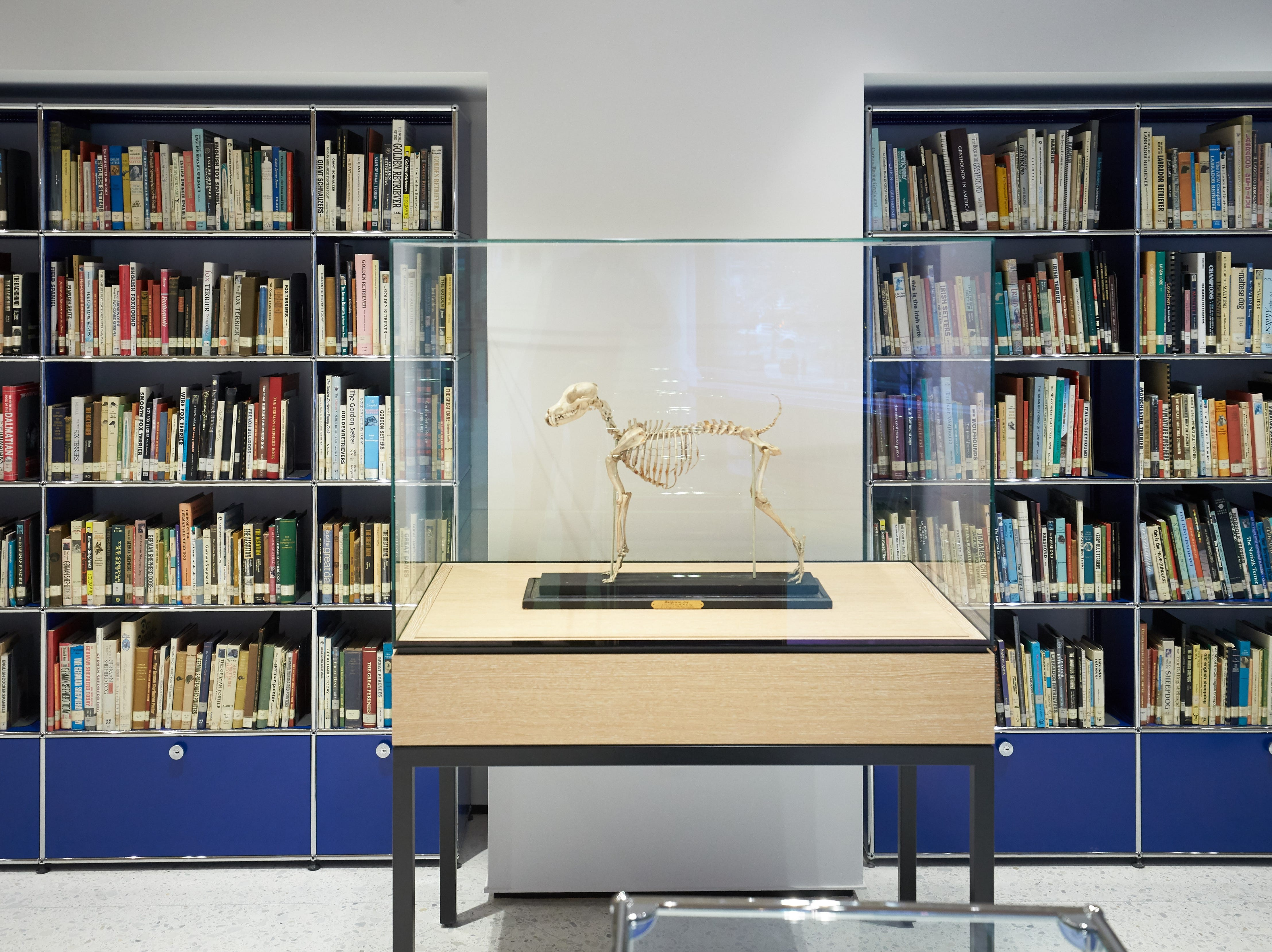 A skeleton of a dog in the library of the Museum of the Dog.