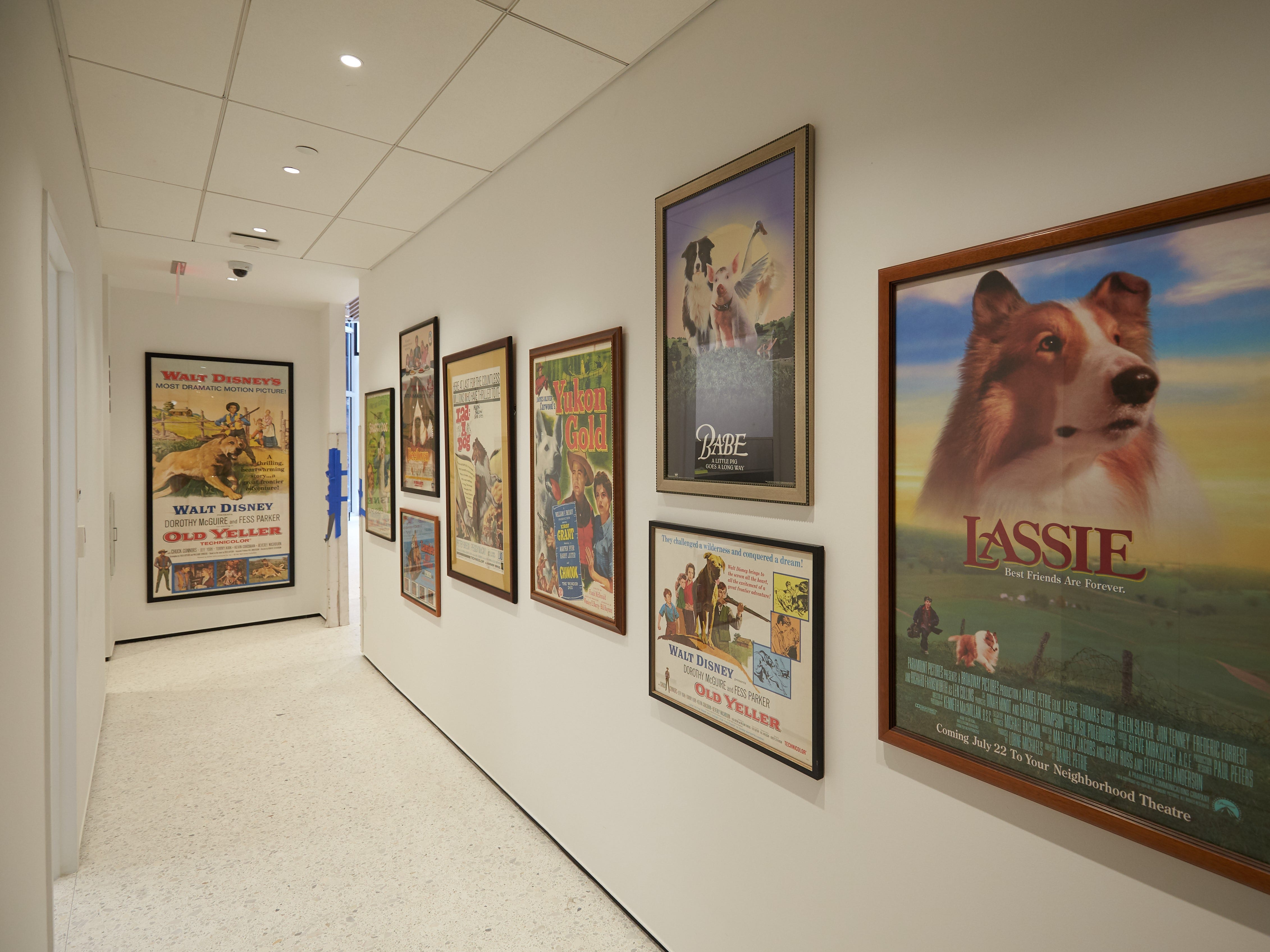 Movie posters decorate a corridor at the Museum of the Dog.