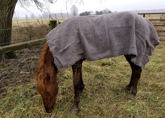 Fire crews rescued this horse from an icy Warren County pond Tuesday