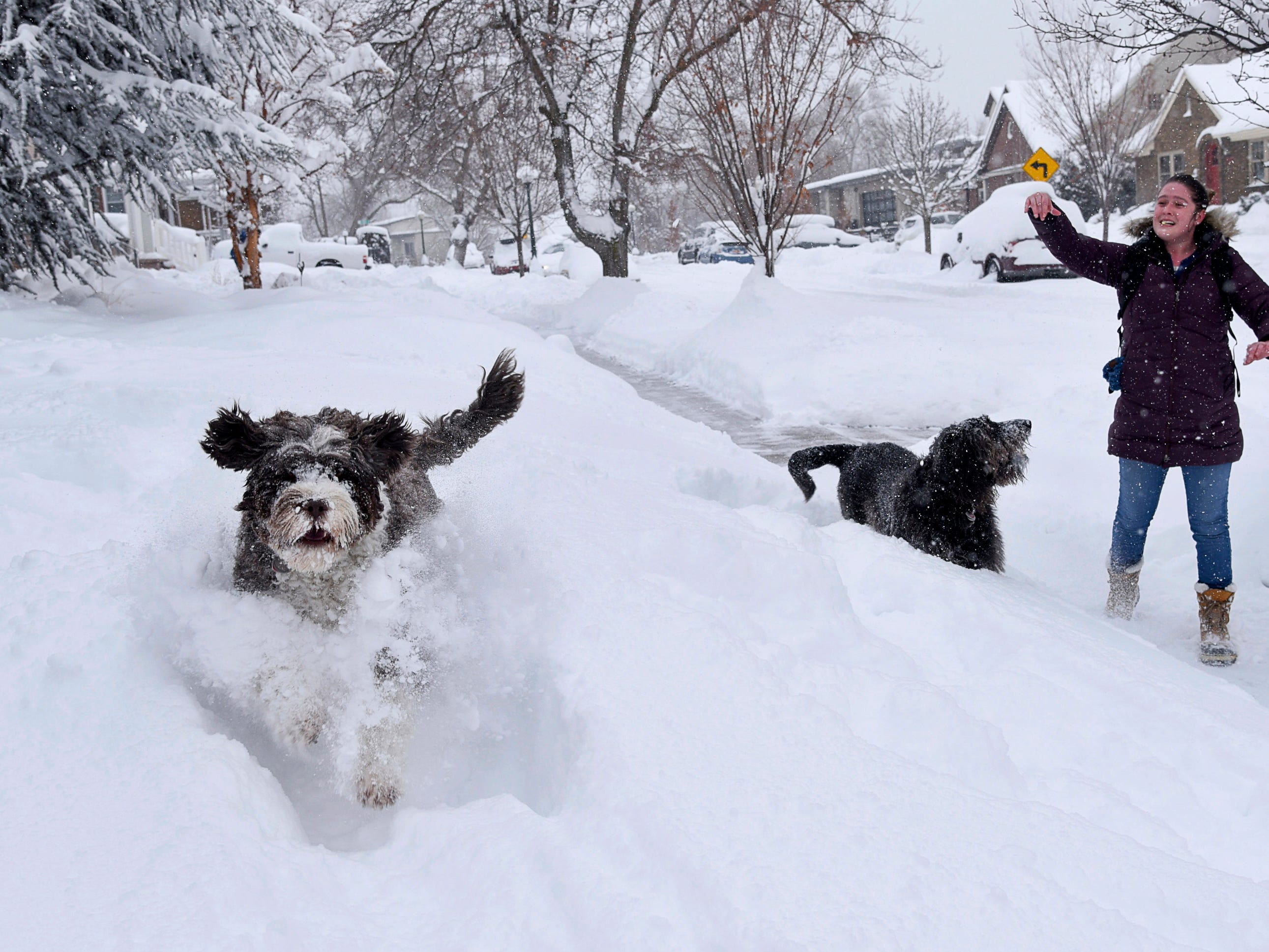 Chester and Moqui play in the snow as Rachel Haisley returns from a walk Wednesday, Feb. 6, 2019, as Salt Lake City, Utah, residents dig out following a heavy snow storm.
