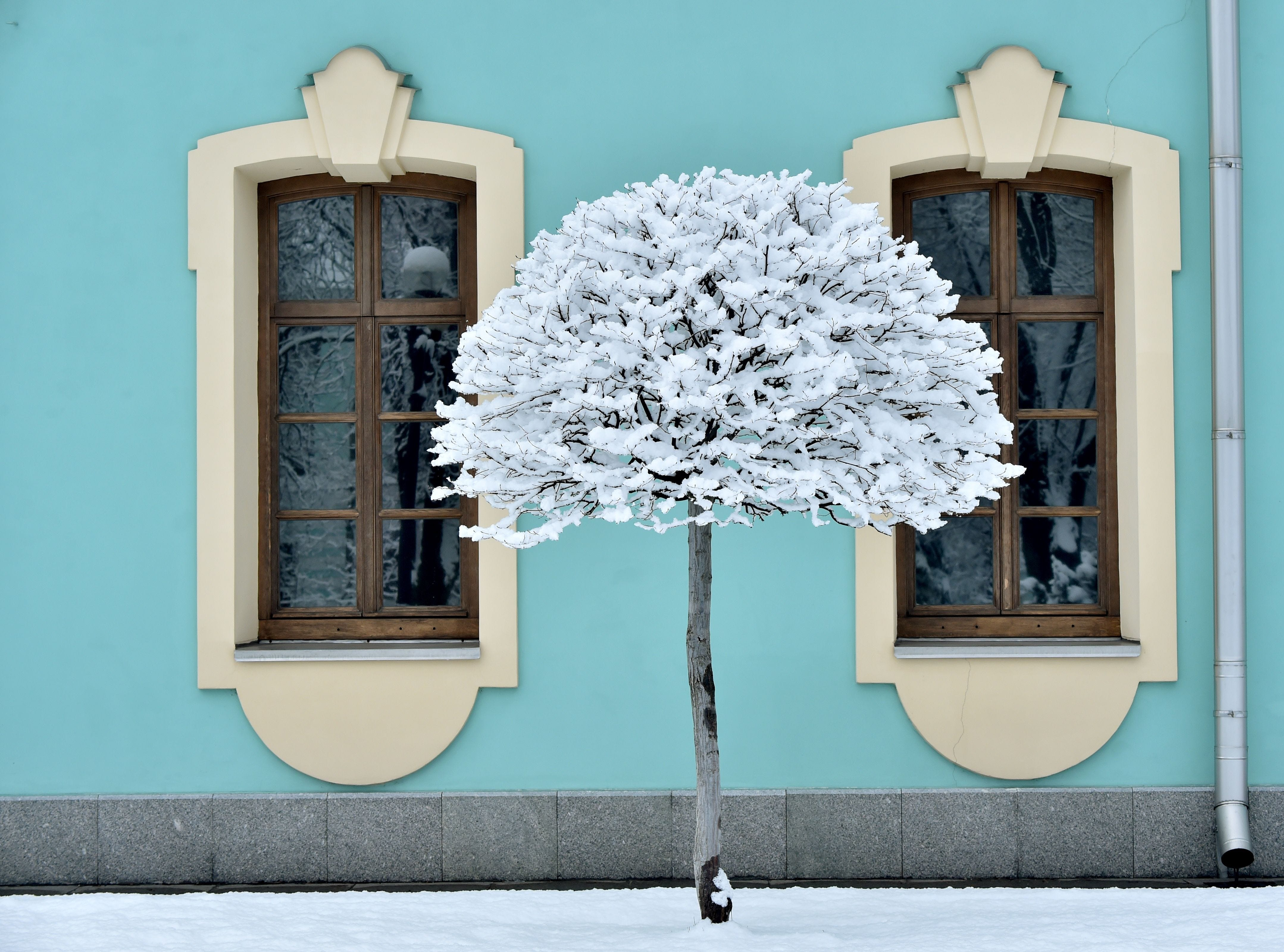 A tree is covered after a heavy snowfall in the Ukrainian capital Kiev, on Feb. 6, 2019.