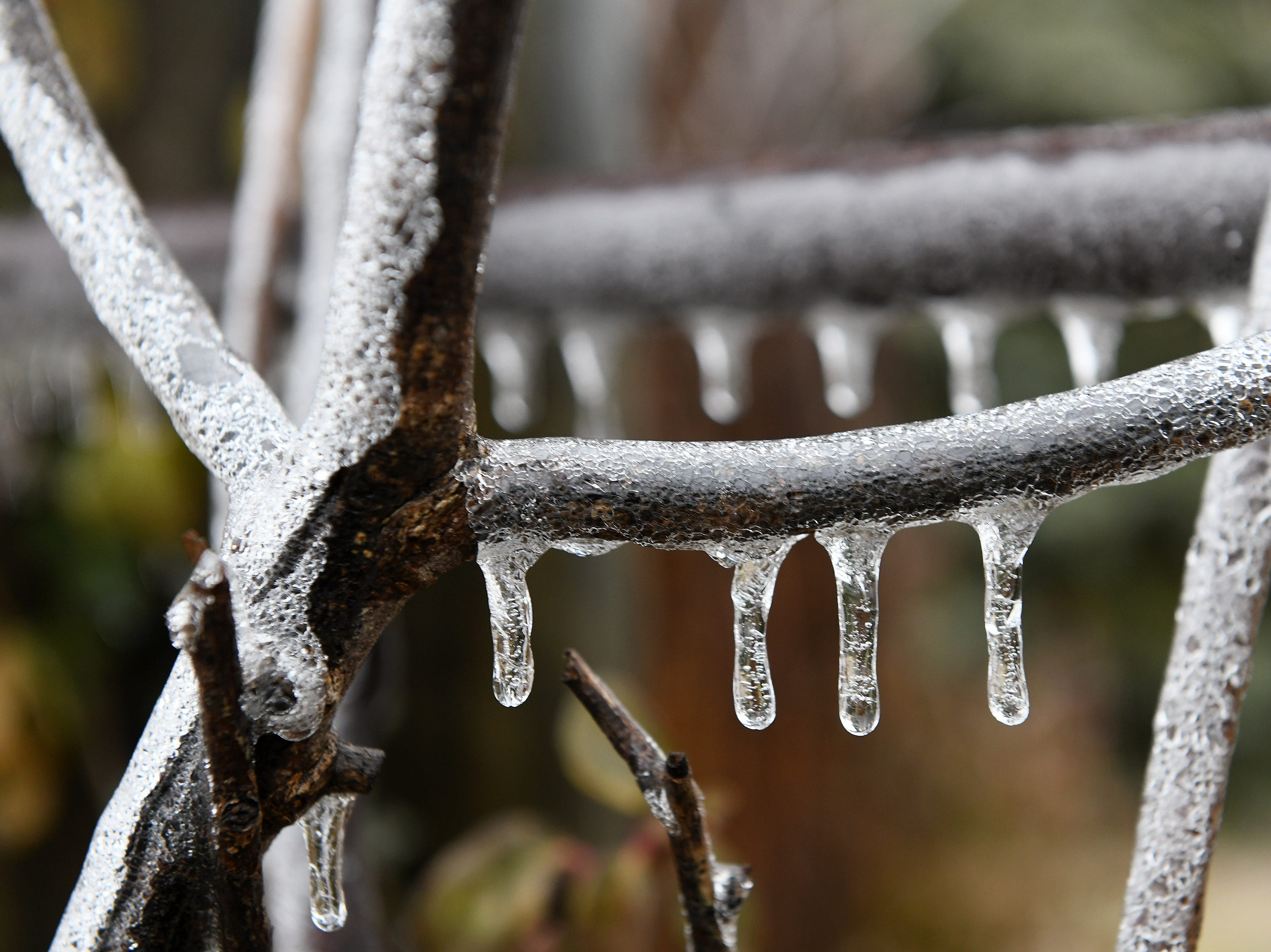 A rose bush stalk and part of a fence is  covered with a layer of ice in Detroit Wednesday.