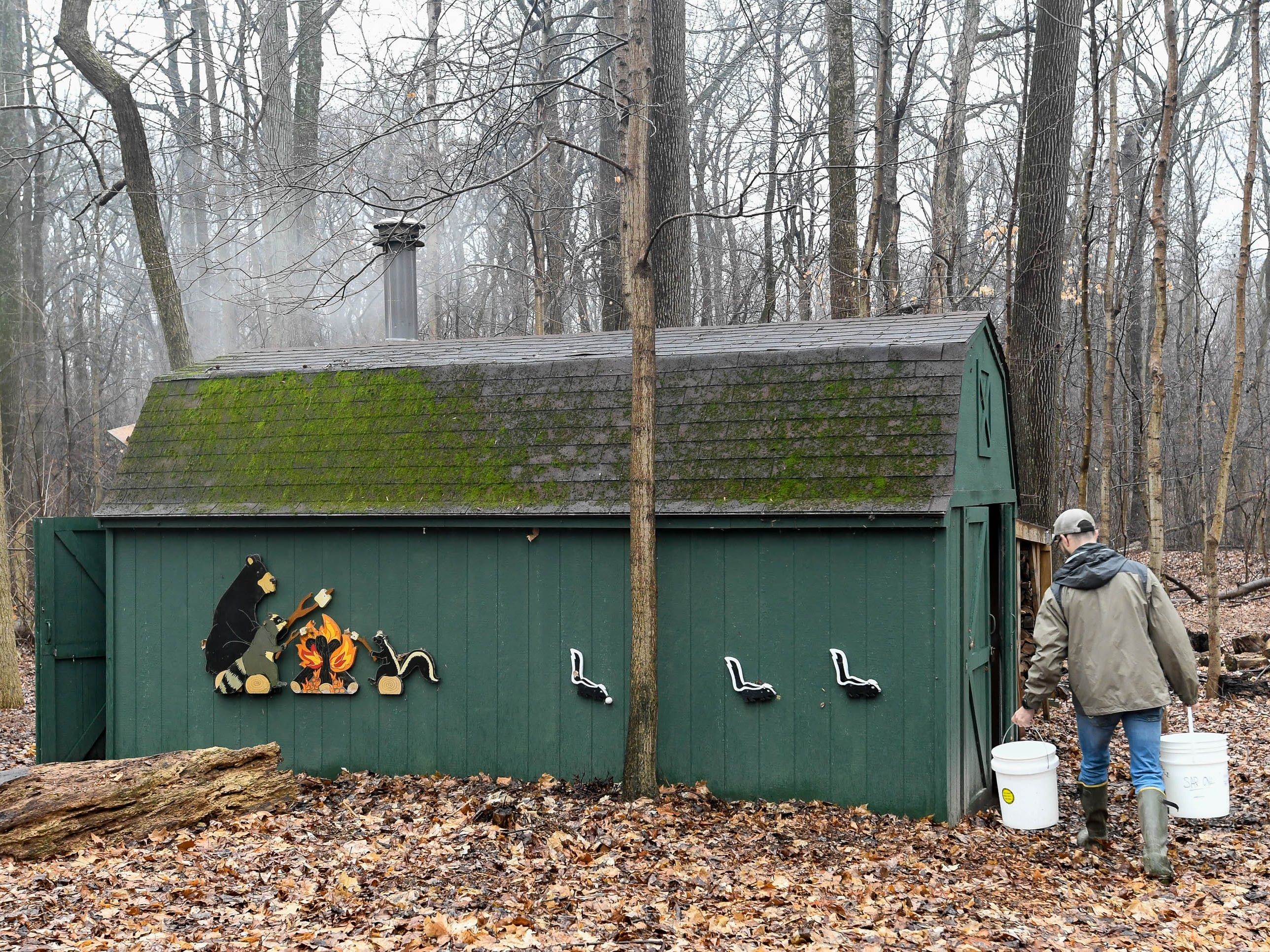 "Derek Cox carries five-gallon buckets of sugar maple sap to the Wesselman Woods Nature Preserve's ""Sugar Shack"" to be cooked down to maple syrup for the park's 40th Annual Sugarbush Festival, Tuesday, February 5, 2019."