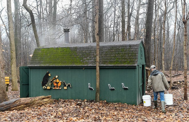 With every tree producing sap, more sugaring houses were needed and so the local mill began sawing lumber and nearly twenty new sugaring houses were built bringing the total to nearly eighty in the maple forest near Donbridge.