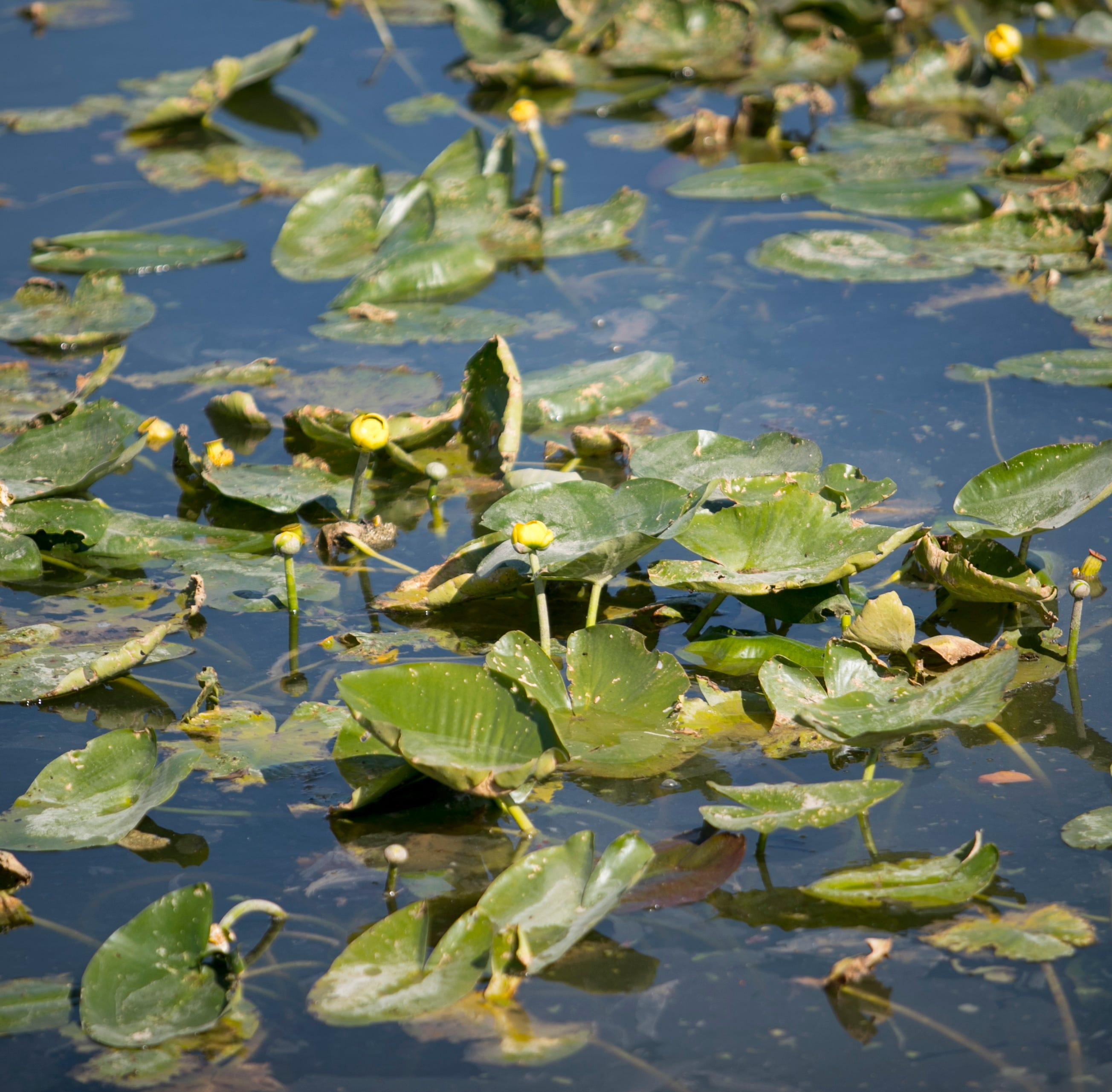 Wildlife officials want more mechanical harvesting, fewer chemicals applied to lakes, rivers