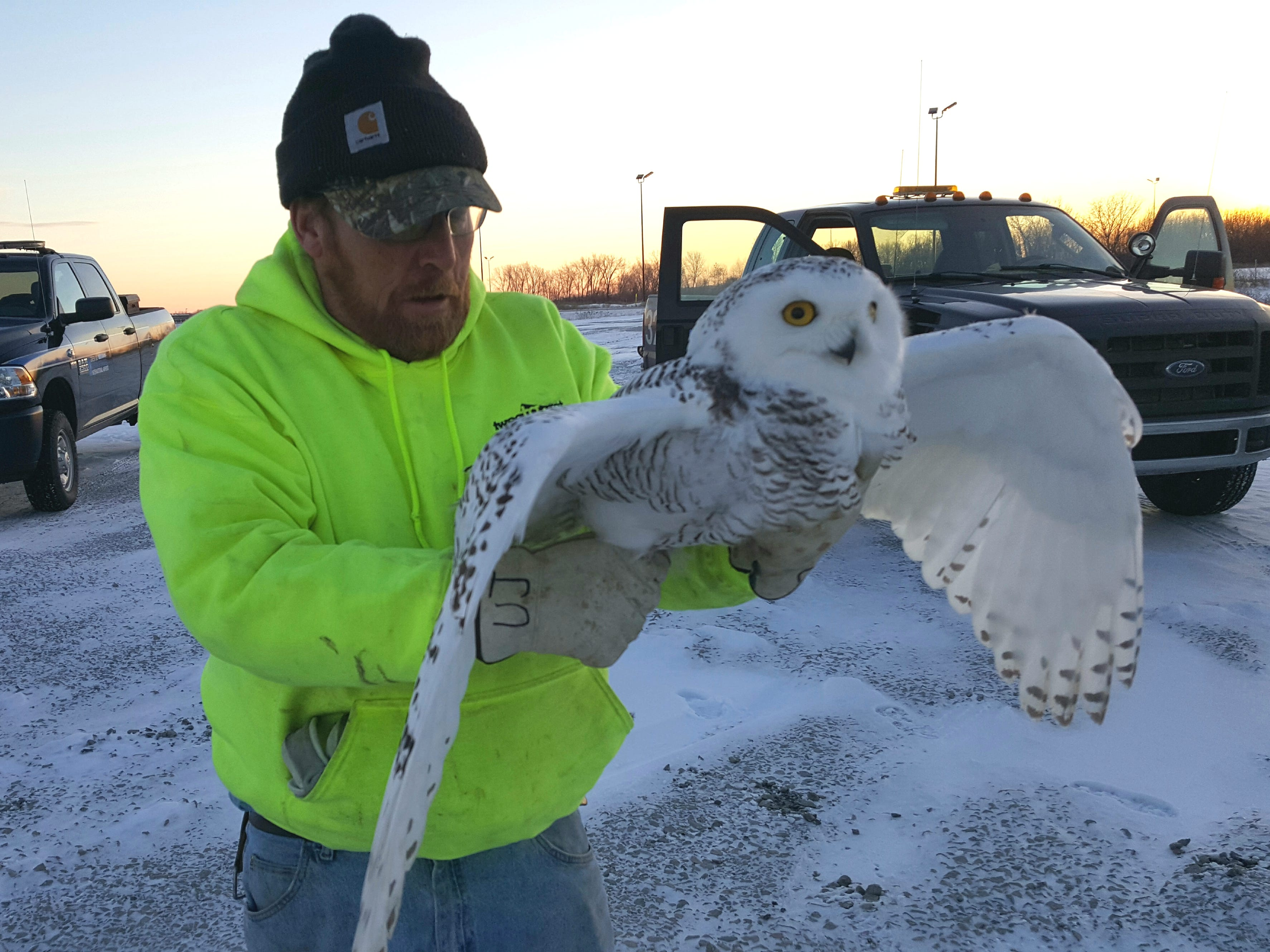 Frank Ujazdowski, volunteer falconer for Project SOAR, looks over a snowy owl he captured last month at Green Bay Austin Straubel International Airport. Project SOAR's goal is to safely capture and relocate snowy owls and other raptors who take a liking to airport grounds during winter months.