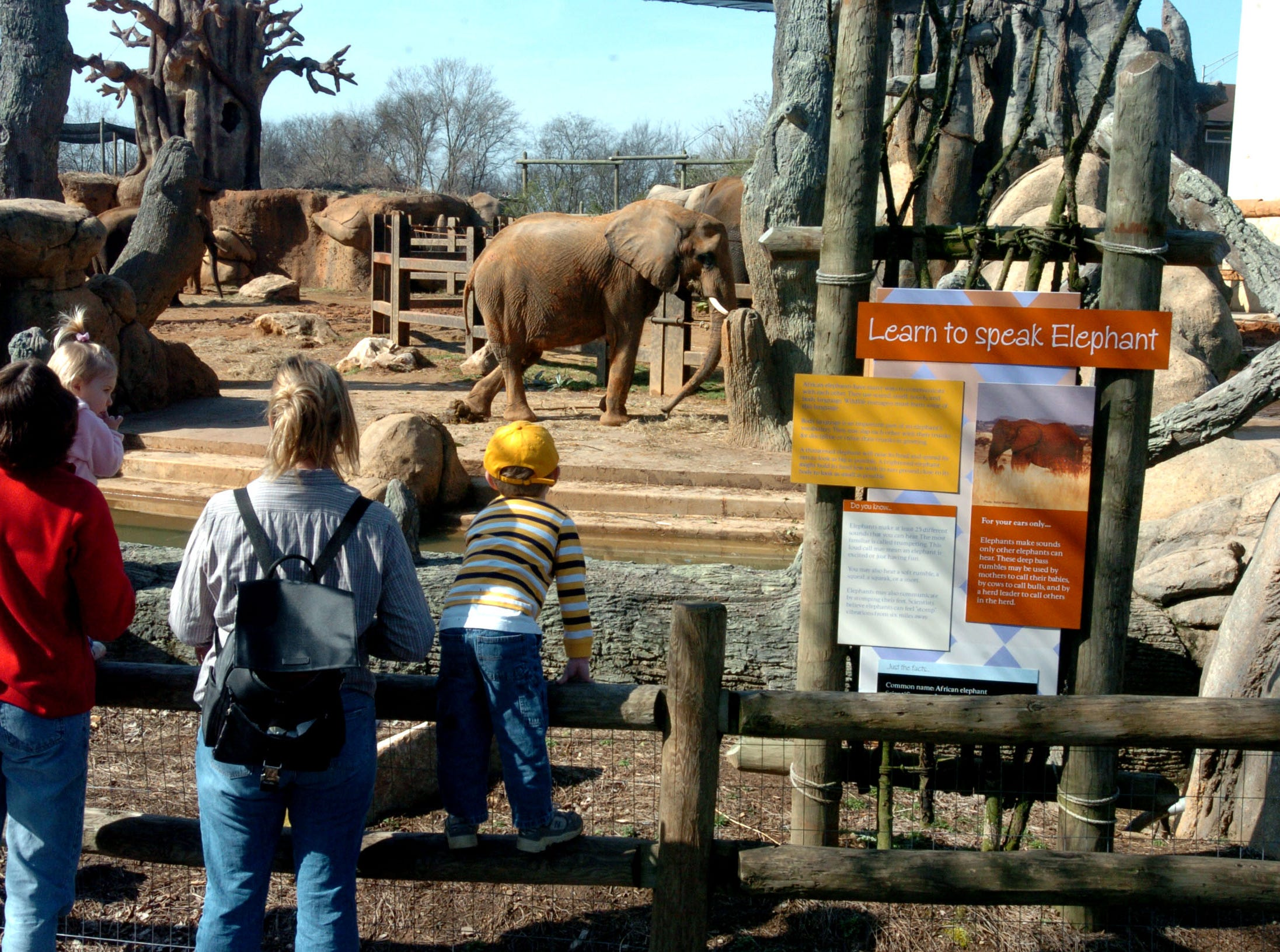 Visitors to the Knoxville Zoo have many new exhibits which allow them beter views of animals like the Elephants.  2/22/2005