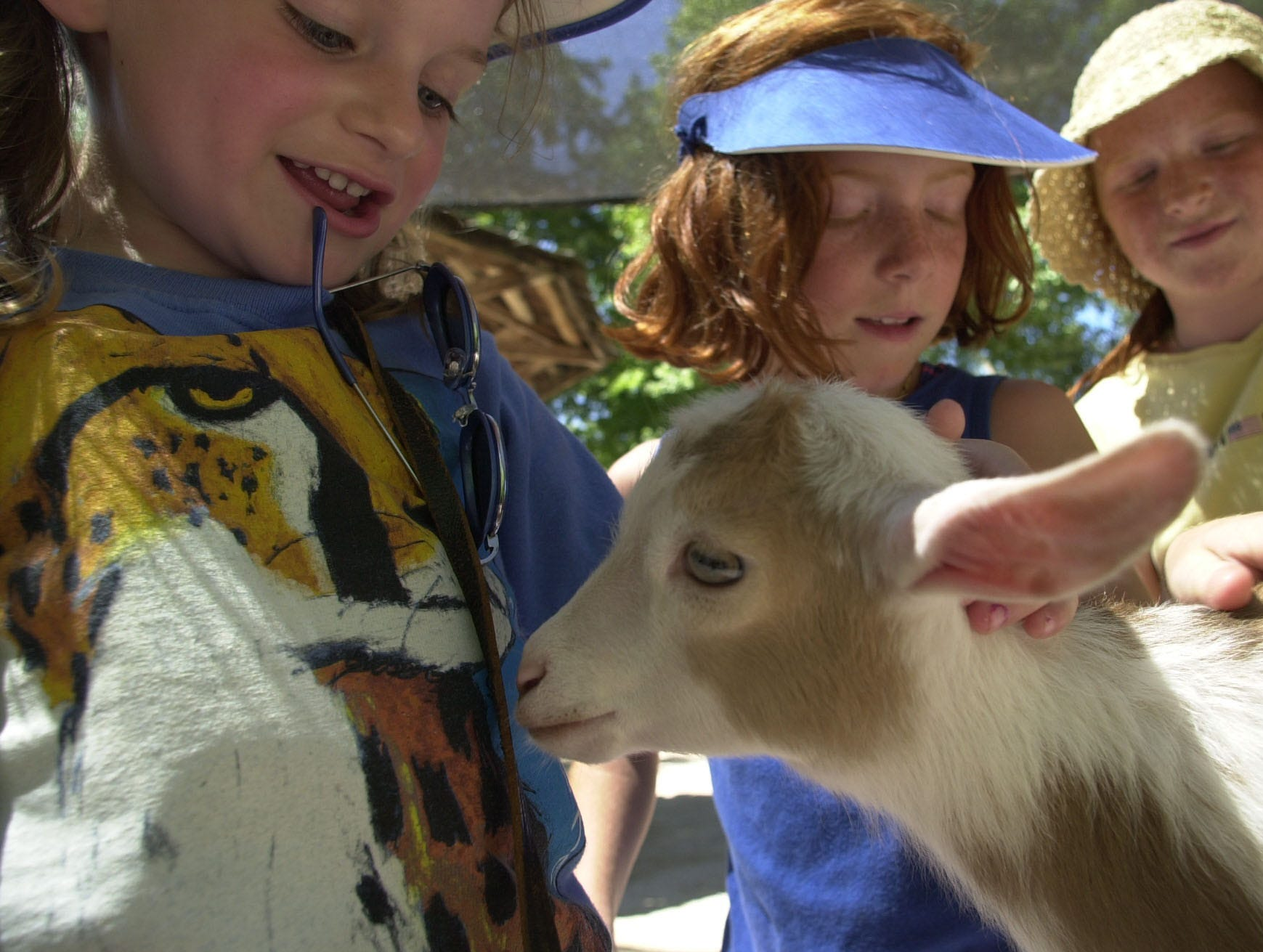Feta, a Nigerian Dwarf baby goat, is surrounded by children as she makes her debut Monday, June 18, 2001 at the Knoxville Zoo in Knoxville, Tenn.  Eager to greet her are, from left,  Katie Williford, 5, of Raleigh-Durham, N.C.,  and her cousins Casey Fitzgerald, 8, and Erin Fitzgerald, 11, both of Knoxville. Feta is one of six Nigerian Dwarf baby goats introduced to the petting zoo on Monday. Each is named for a type of cheese.