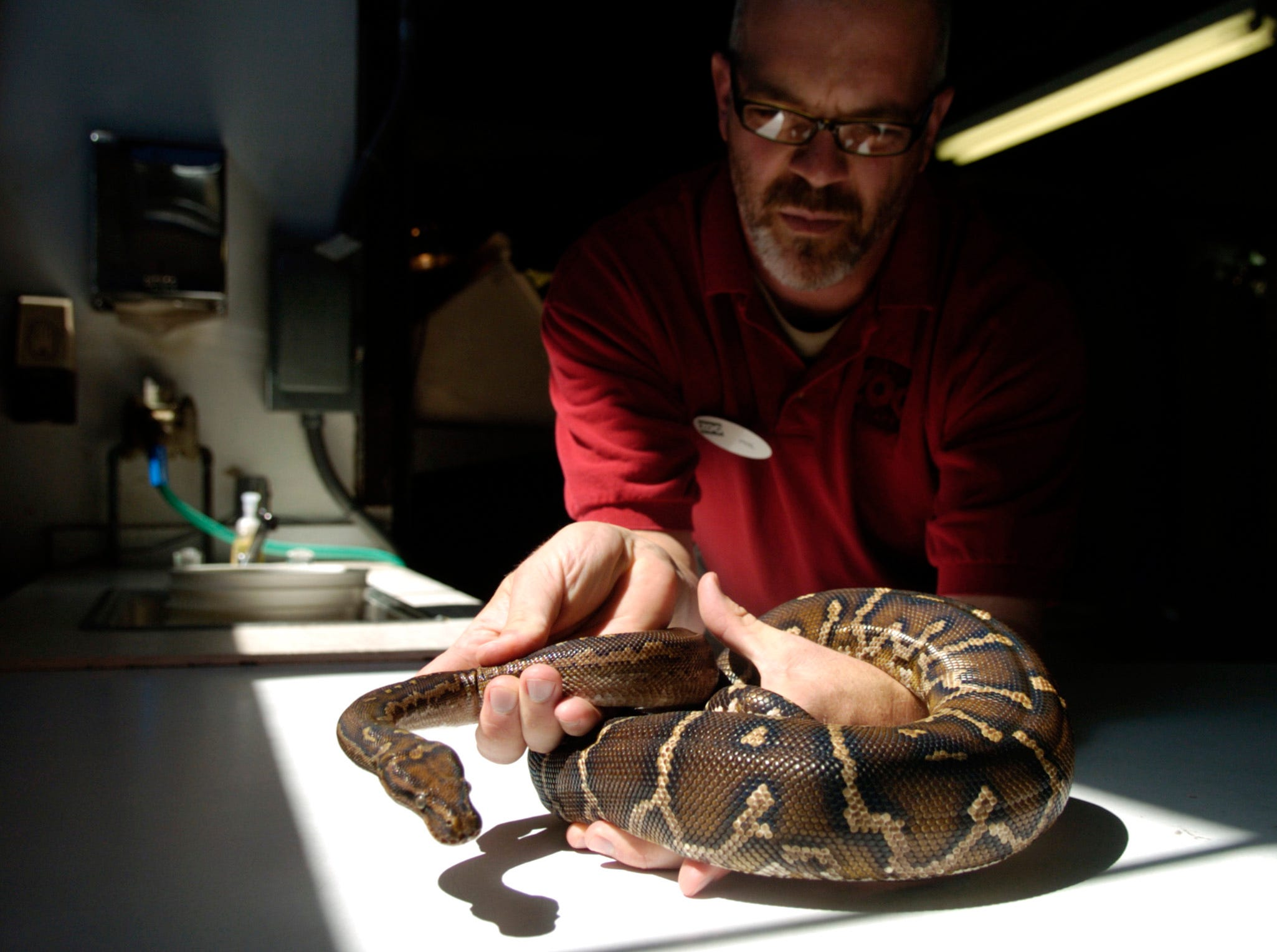 Phil Colclough is the assistant curator of herpetology, the branch of zoology that studies reptiles and amphibians, at the Knoxville Zoo. He holds an Angolan Python under the sunlight, though not poisonous, snakes will still bite when not handled properly. Tuesday, September 4, 2007